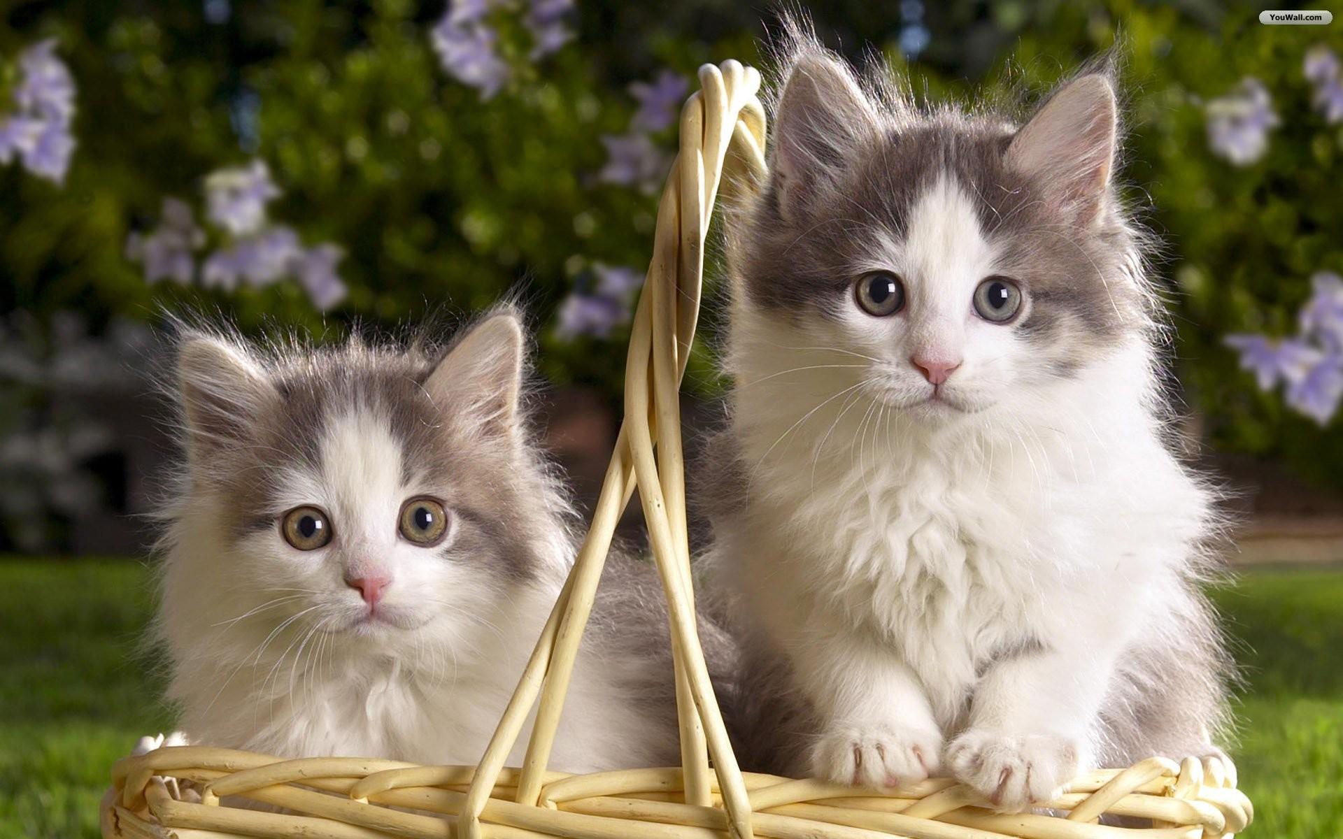 Cats · Cats Cute Cat And Kitten Cats Kittens Desktop Wallpaper