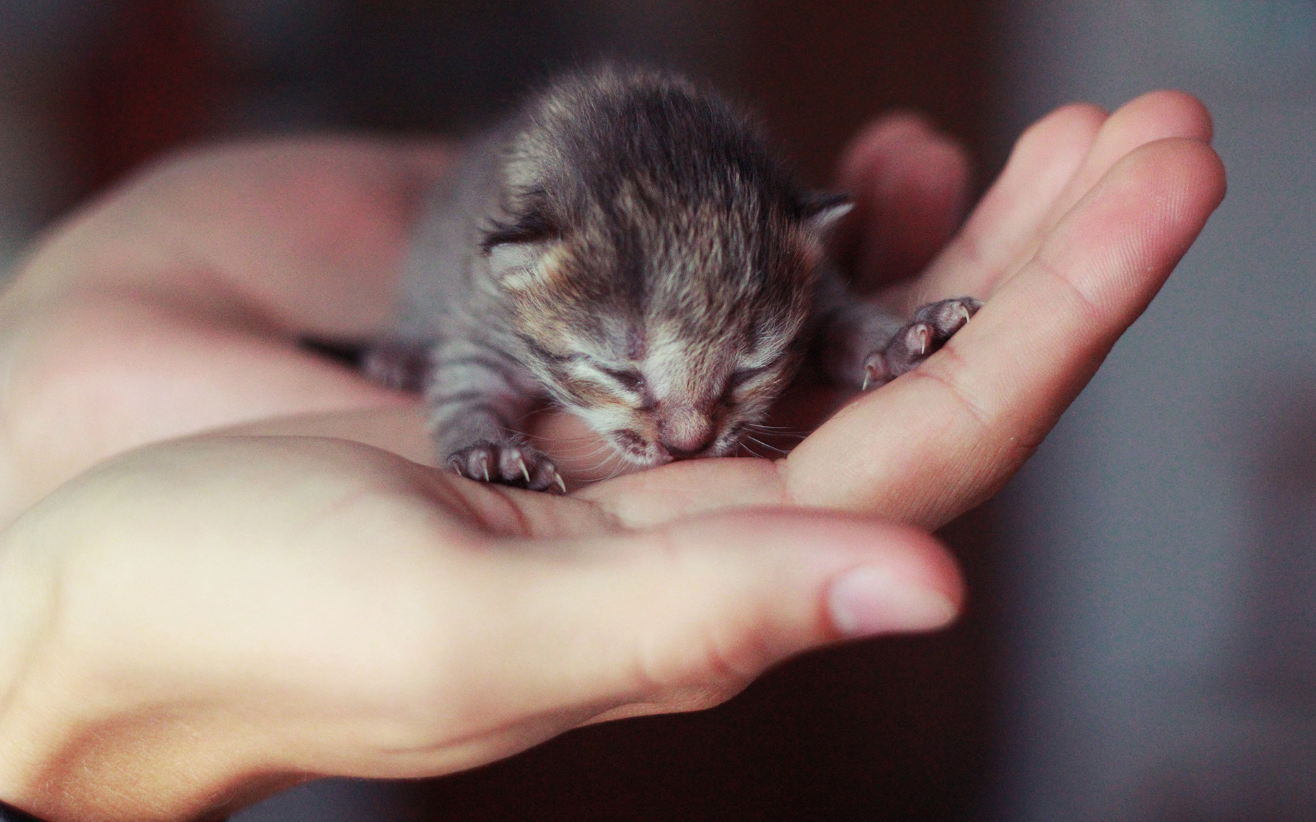 wallpaper of cats and kittens. Â«Â«