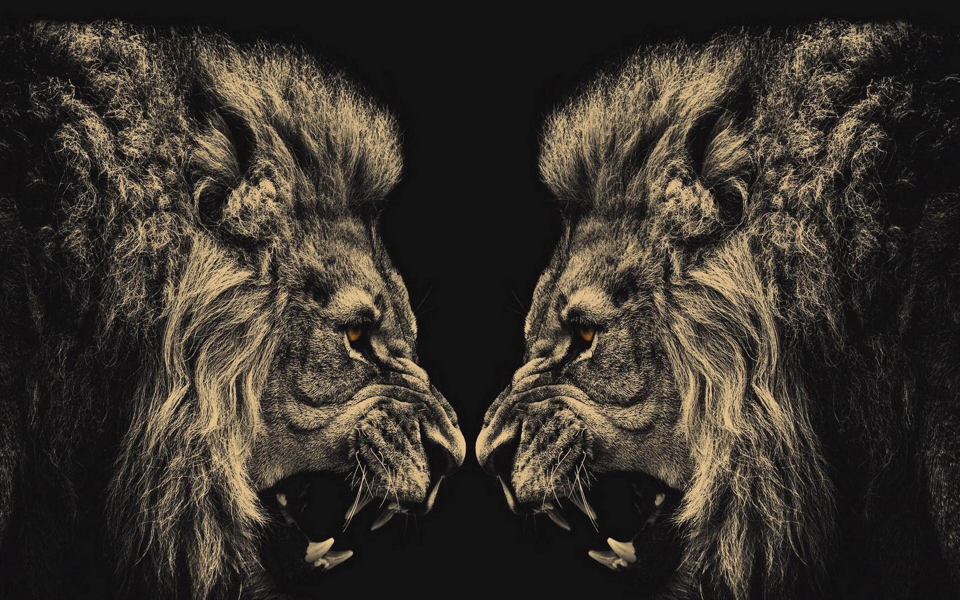 0 Angry Lion HD Wallpaper BigHDWalls Angry Lion Hd Wallpaper