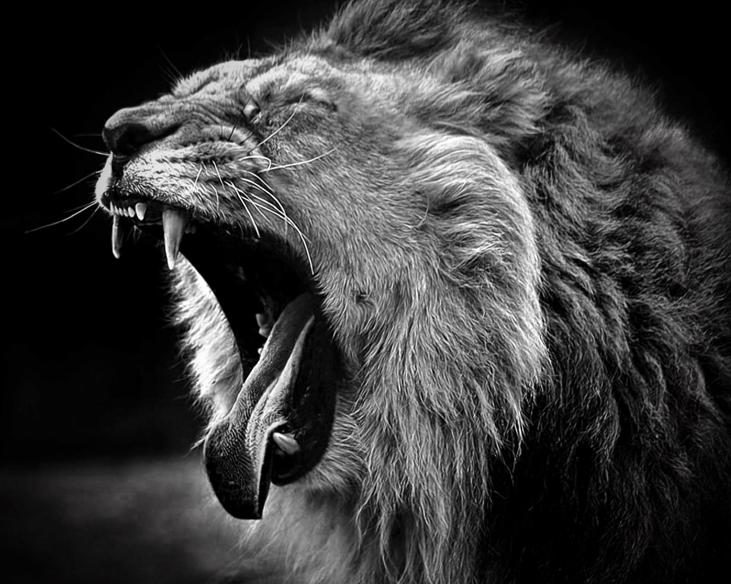White lion wallpaper widescreen – photo#1
