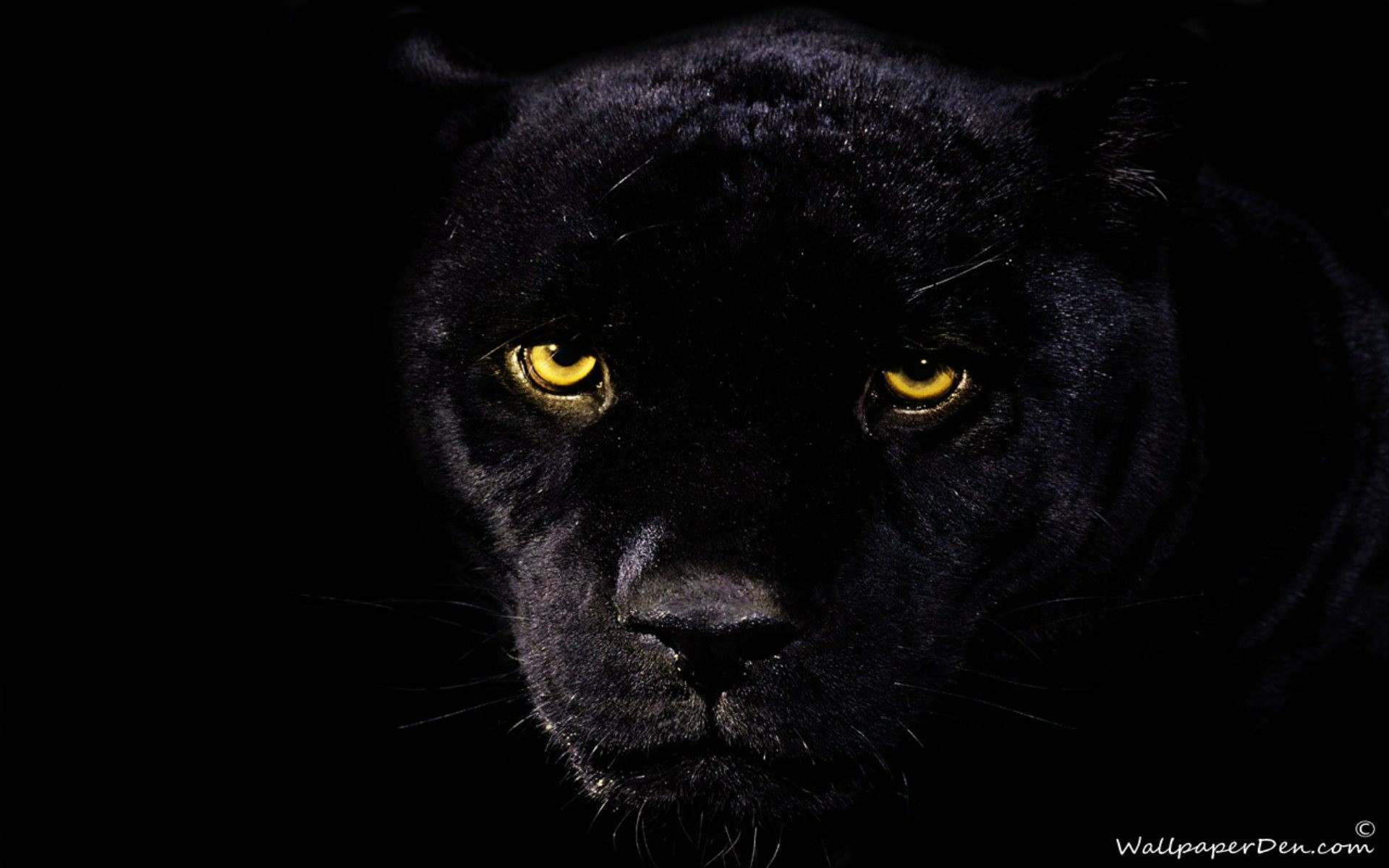 Black Panther Wallpaper HD