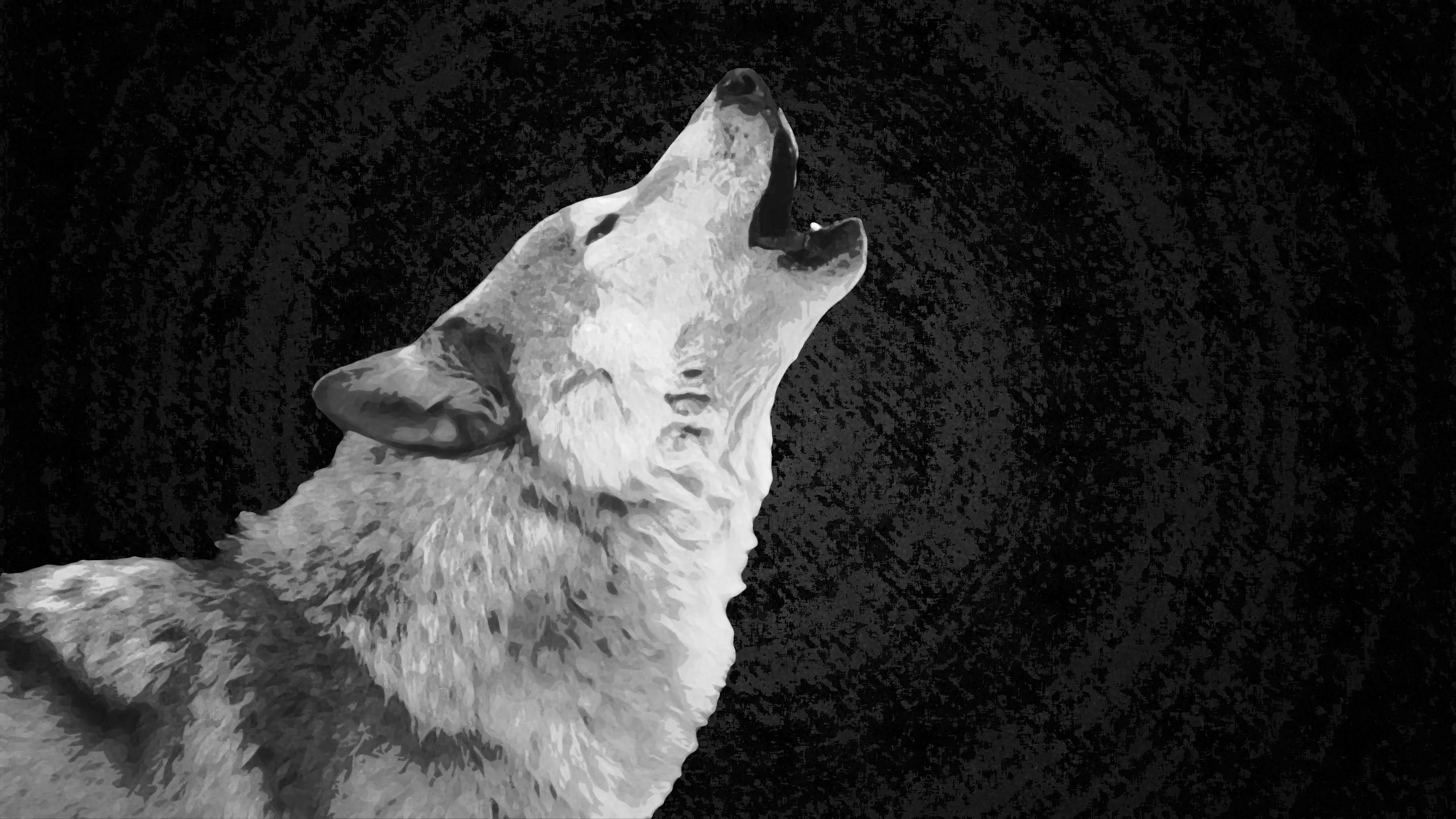 Wolf Wallpaper White by xHuskie Wolf Wallpaper White by xHuskie
