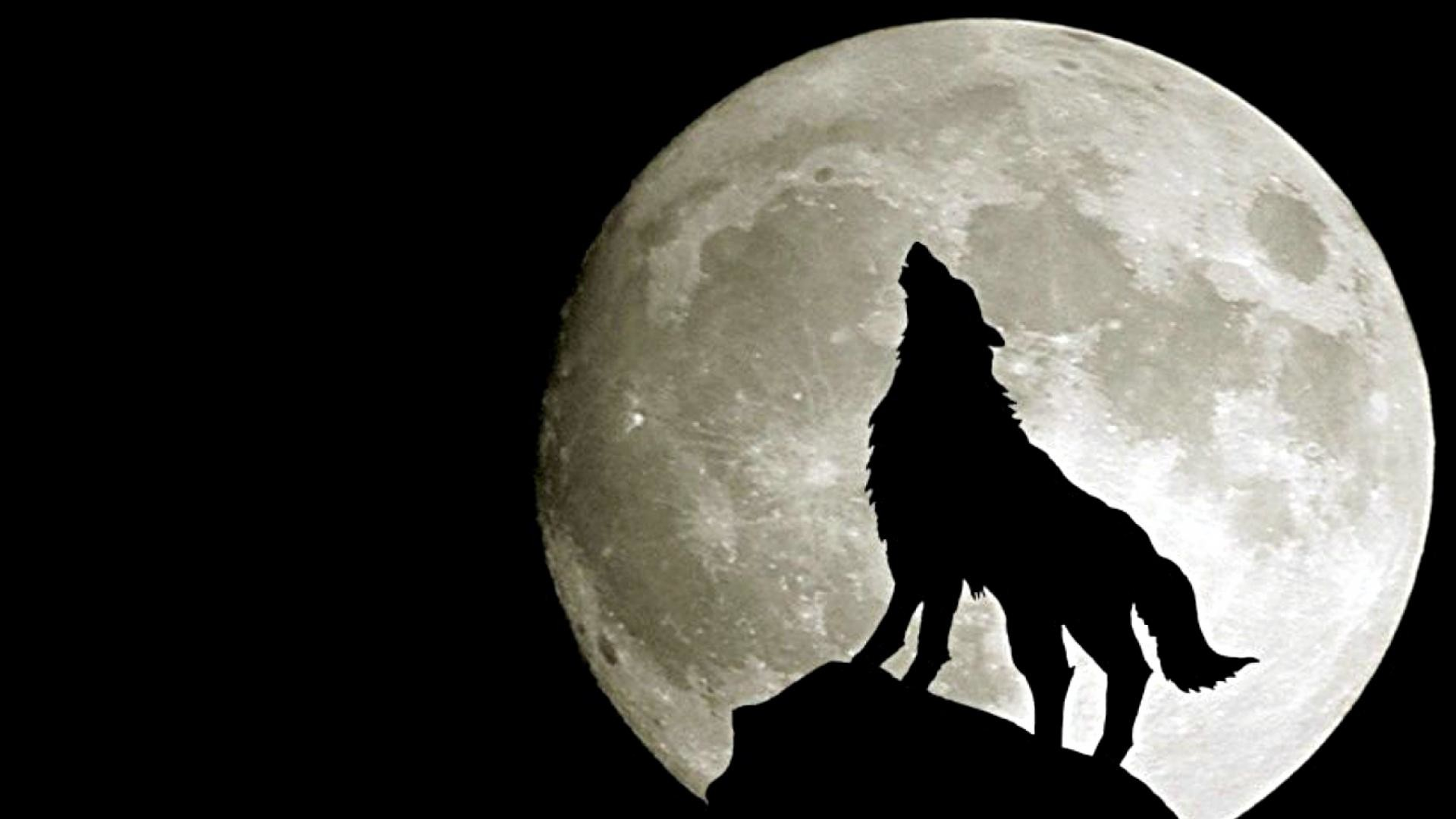 wolf in moon