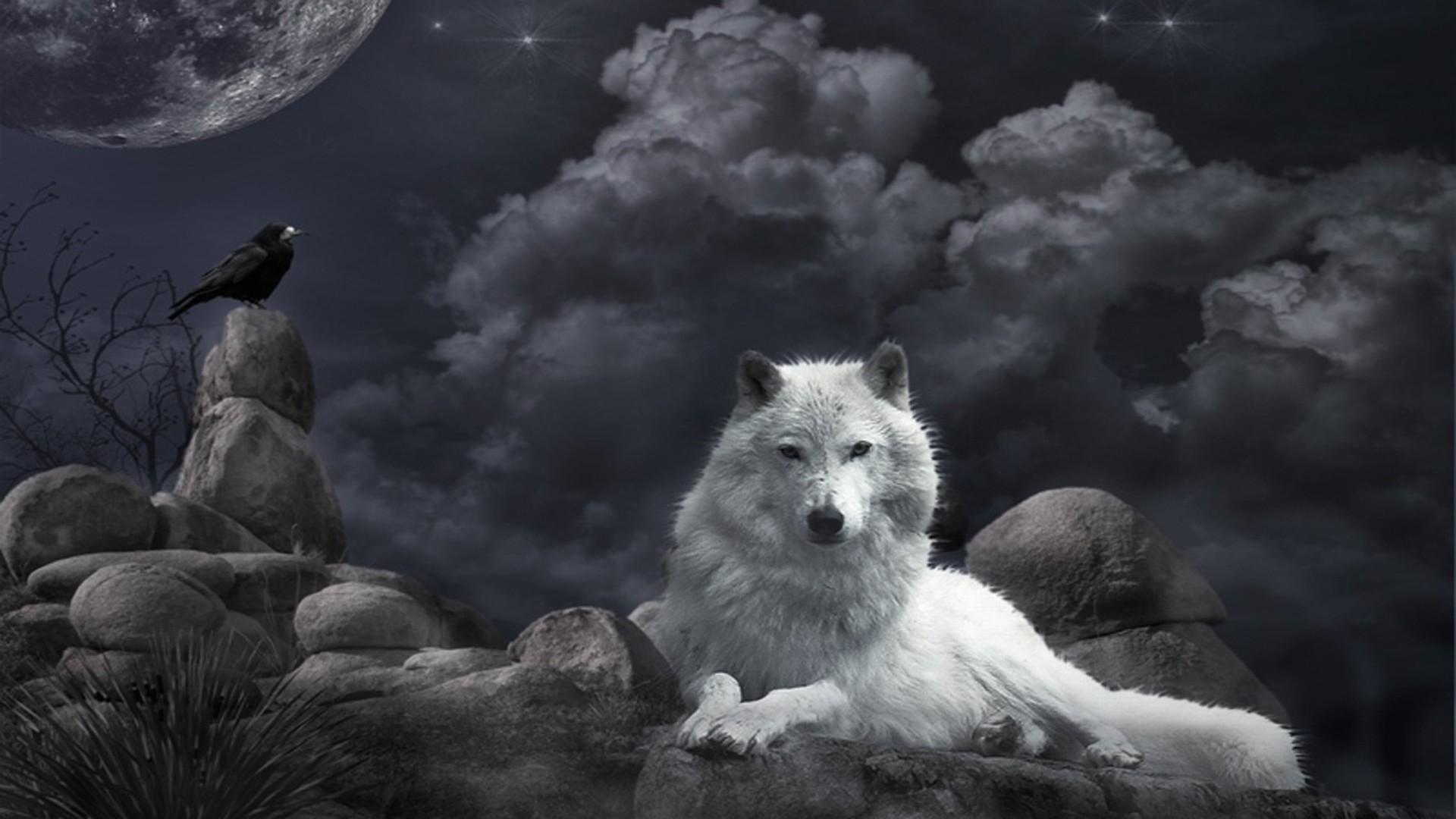 Wolf Wallpaper 1080p For Desktop Wallpaper 1920 x 1080 px 623.08 KB black  moon iphone