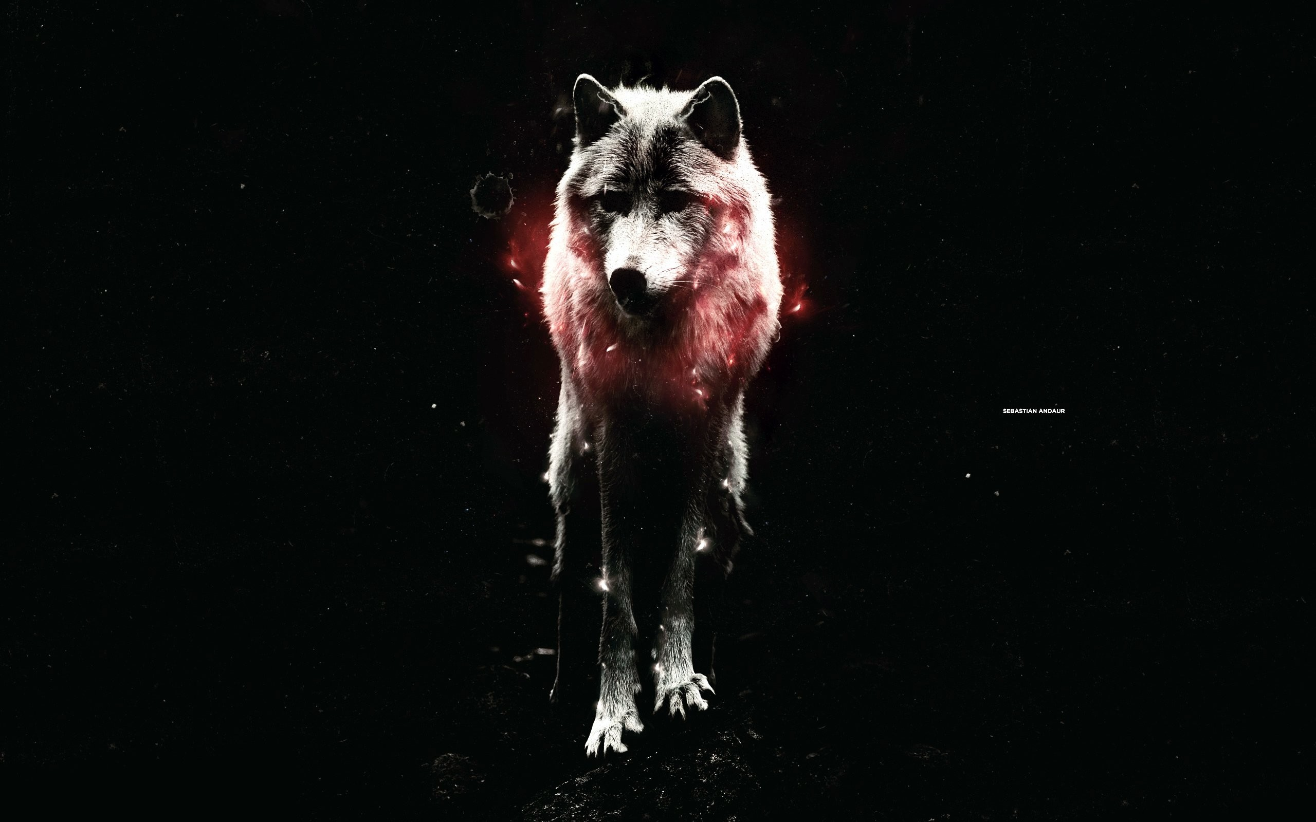 Wolf wallpaper with dark / black background / space