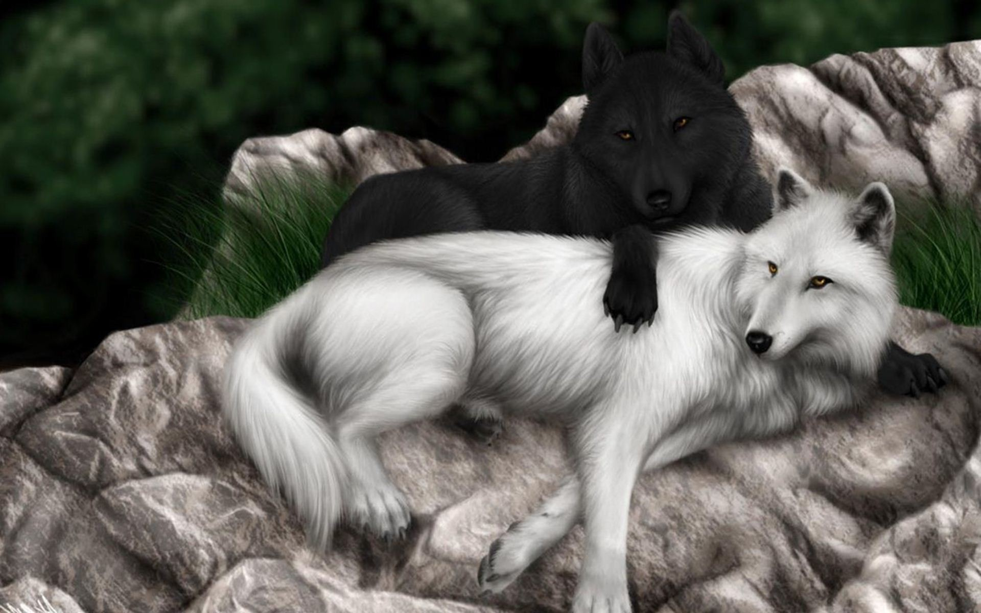 Image – Black And White Wolf Wallpaper.jpg   Animal Jam Clans Wiki   FANDOM  powered by Wikia