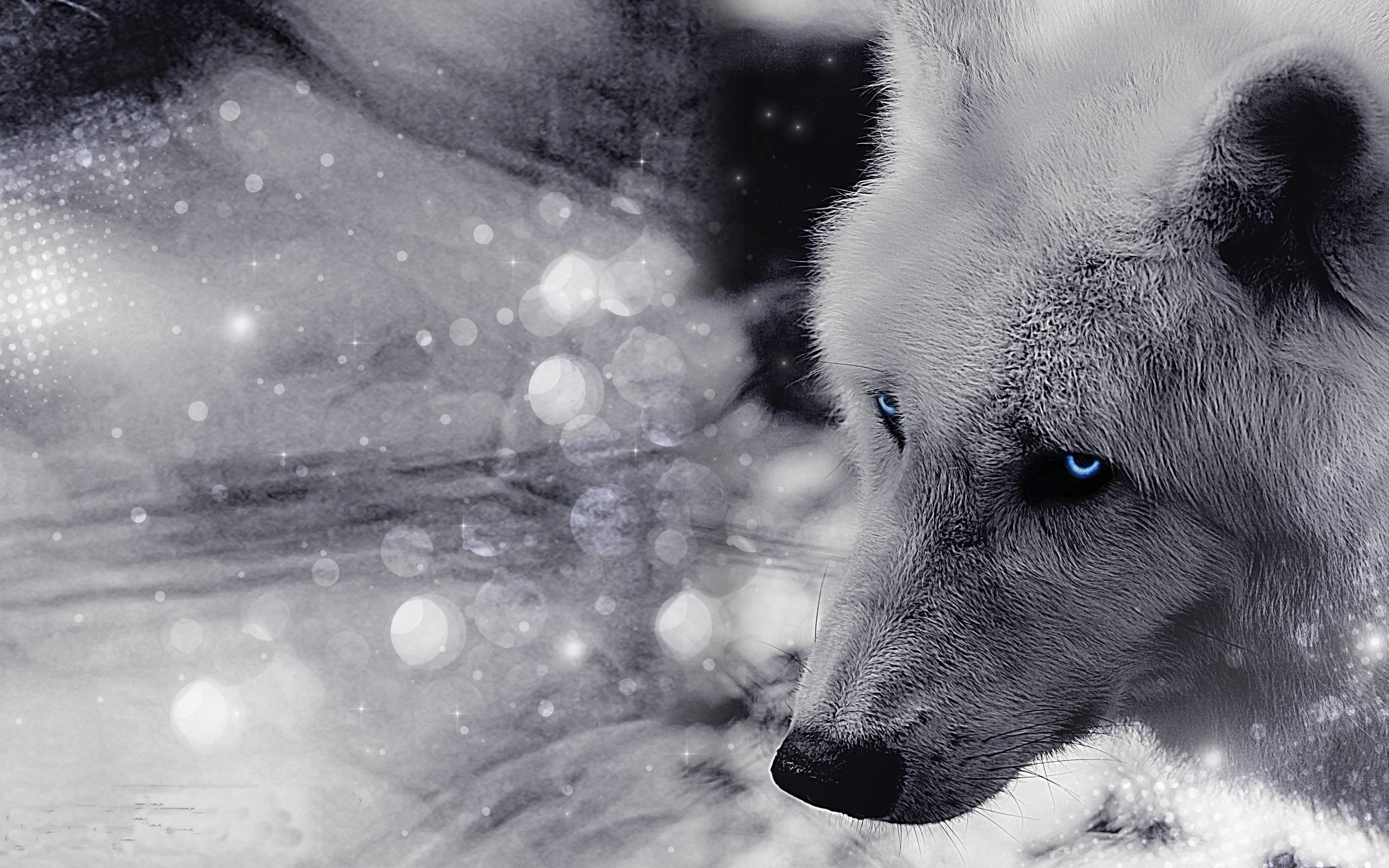 Animals For > Black Timber Wolf Wallpaper