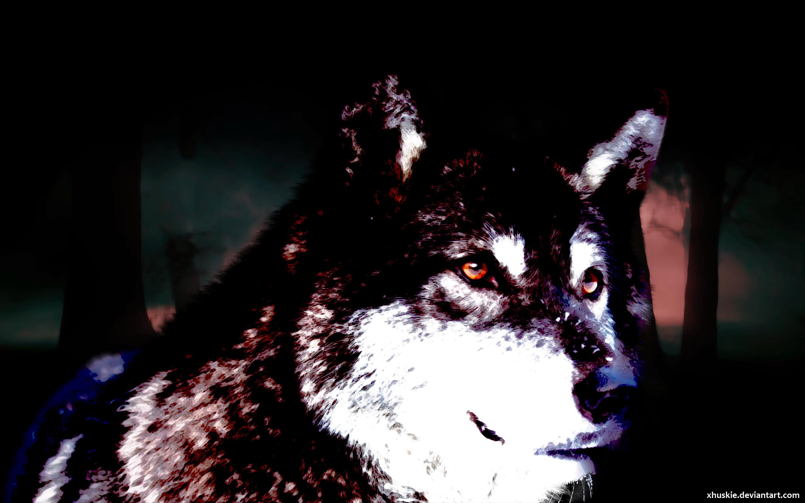 Black Wolf Wallpaper by xHuskie Black Wolf Wallpaper by xHuskie