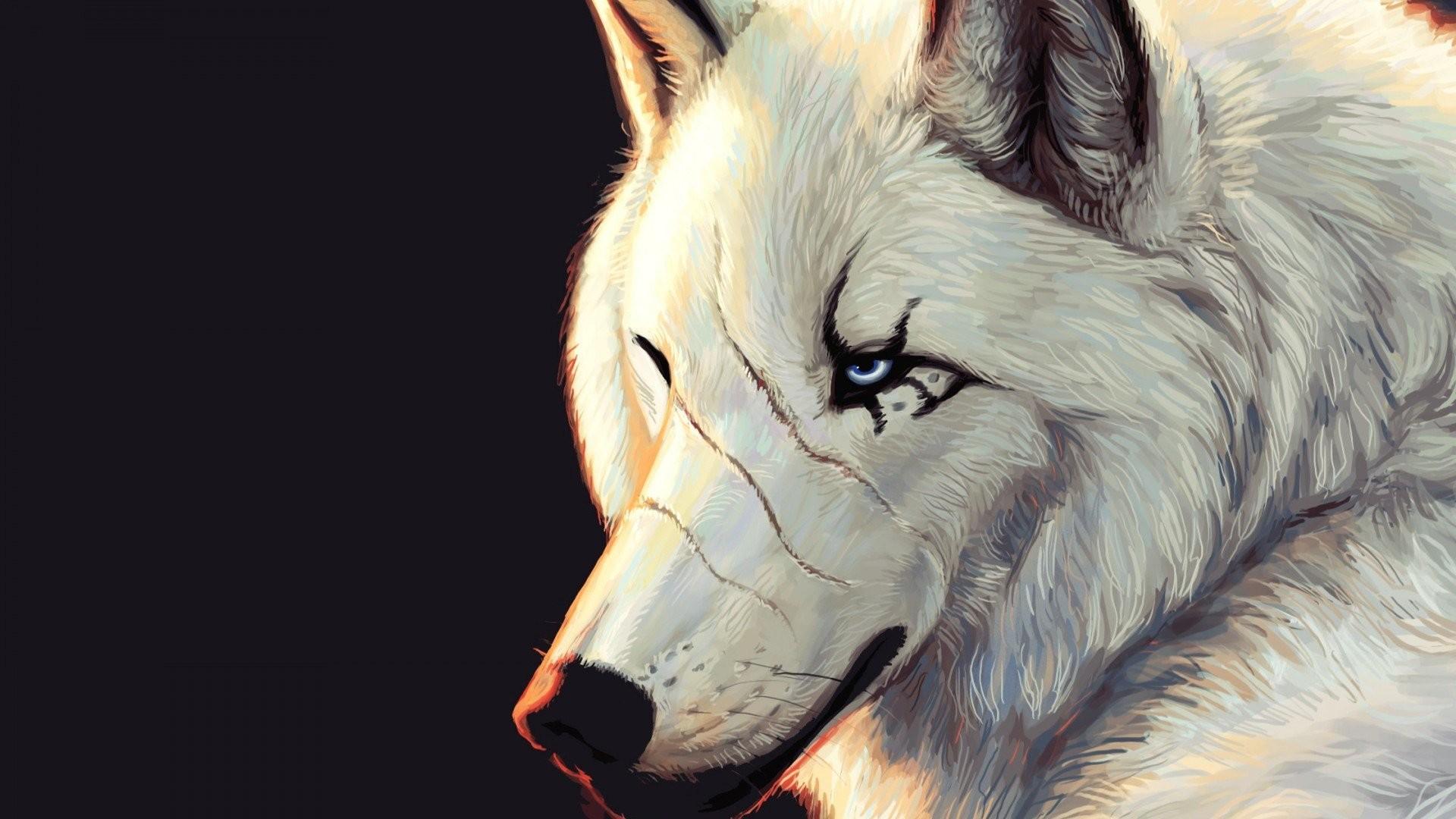 Wolf Wallpaper Hd Wallpaper