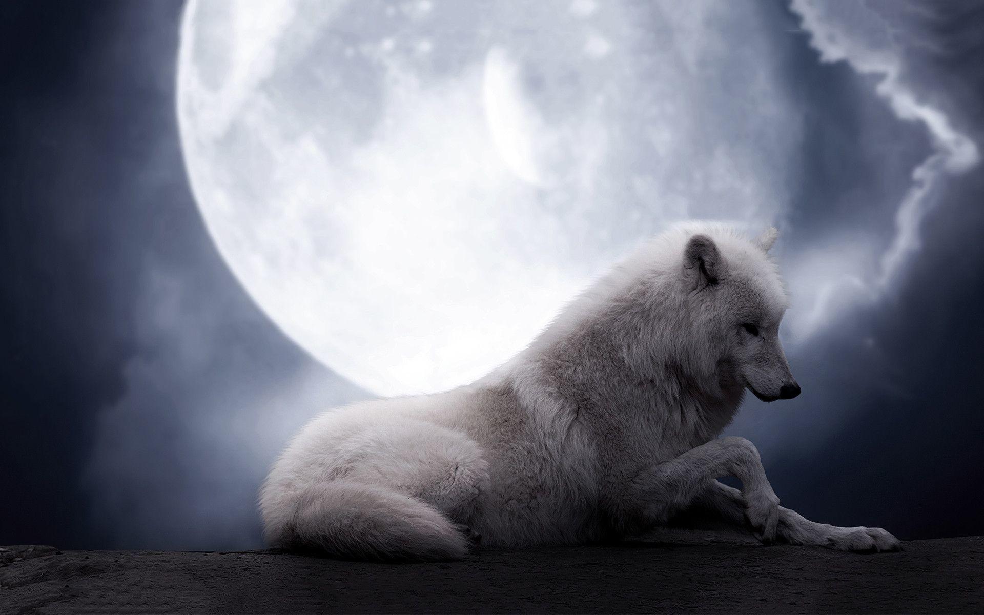 desktop wallpaper for wolf moon, 862 kB – Beowulf Robertson