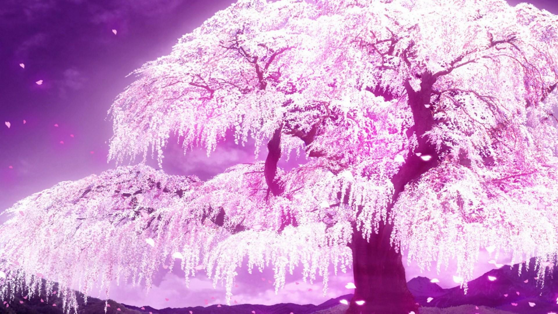 1000+ images about 1アニメ壁紙 on Pinterest | Anime scenery … Cherry Blossom  WallpaperCherry …