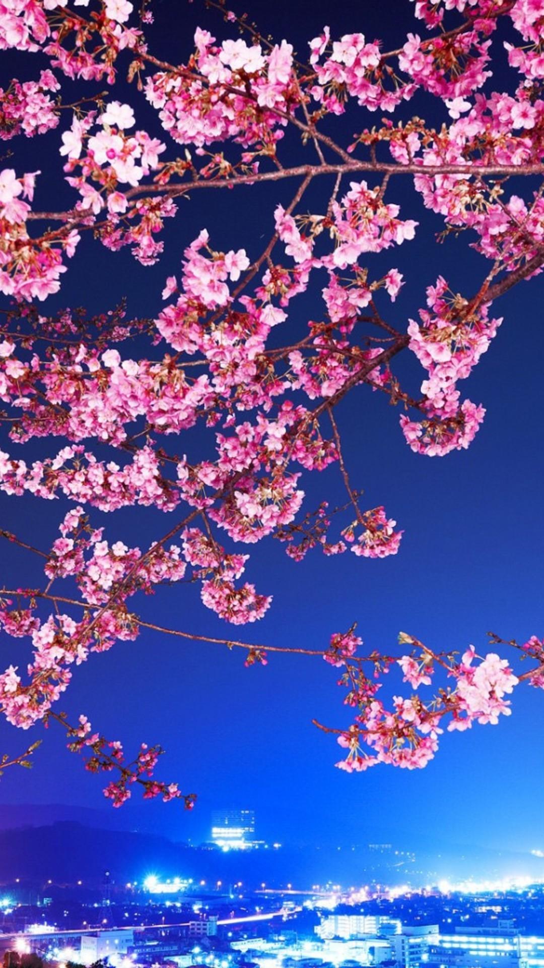 cherry blossom iphone full hd wallpaper