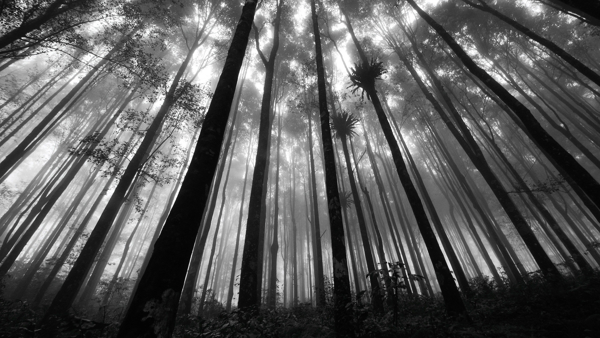 Black And White Pictures Anime Forest 3 Wide Wallpaper. Black And White  Pictures Anime Forest 3 Wide Wallpaper