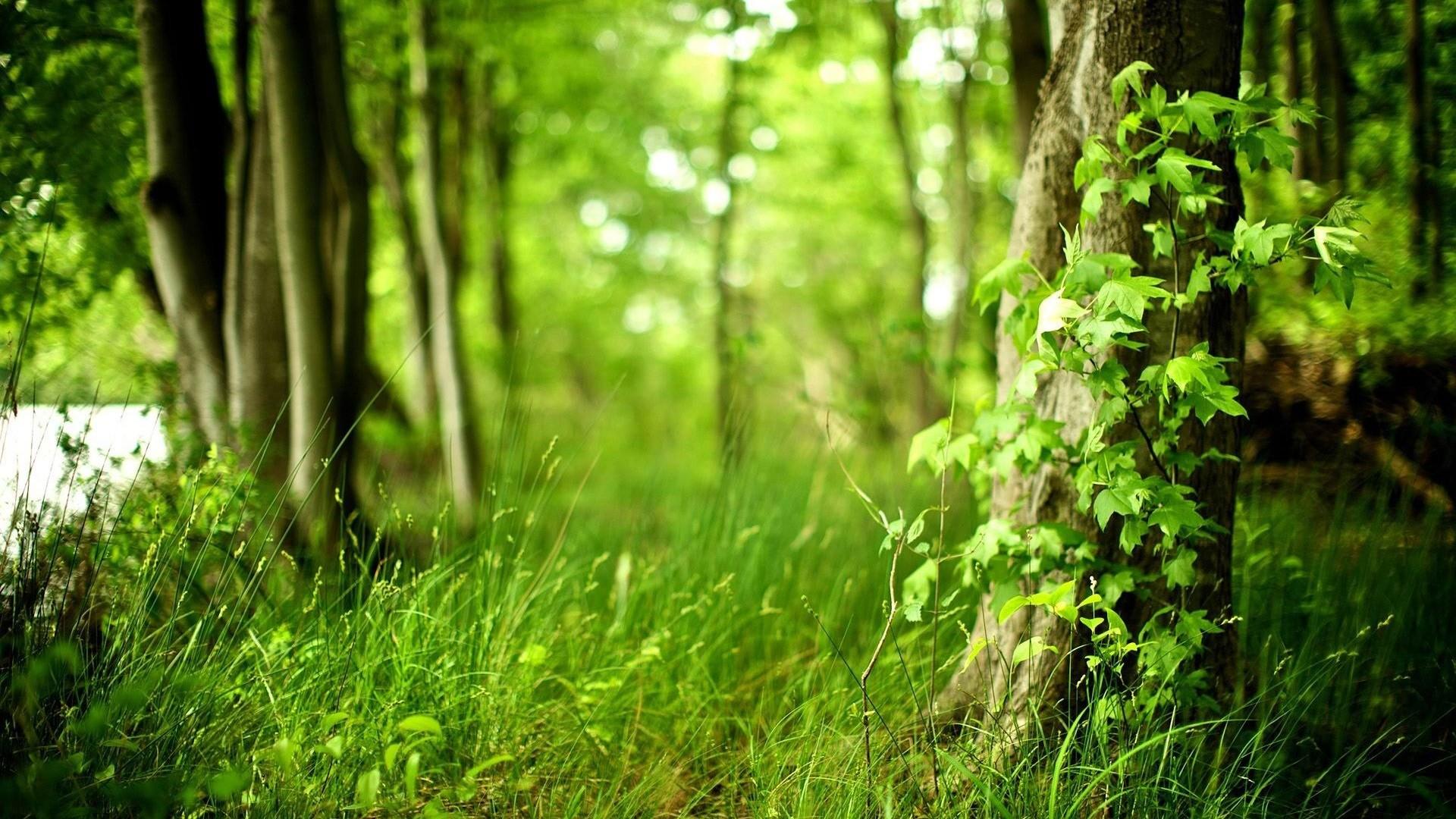 Forest Landscape Wallpaper Wide