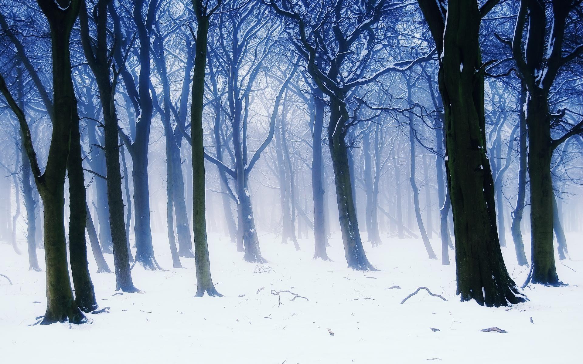 Filename: seasons-winter-trees-fir-snow-nature-wallpaper-1.jpg