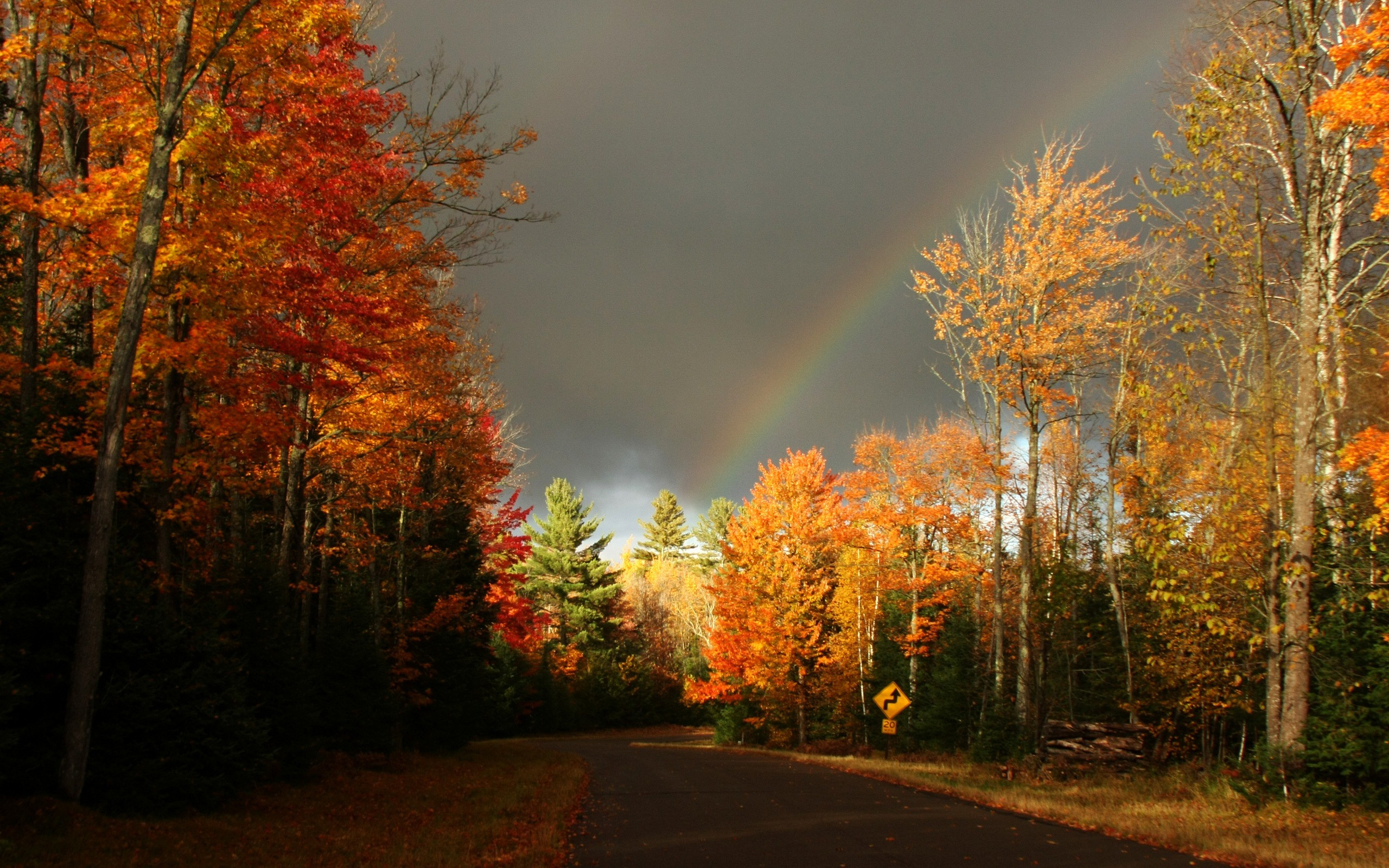 Gorgeous-Autumn-Road-Wallpaper.jpg 2,560×1,600 pixels | Autumn Fun |  Pinterest | Autumn and Wallpaper