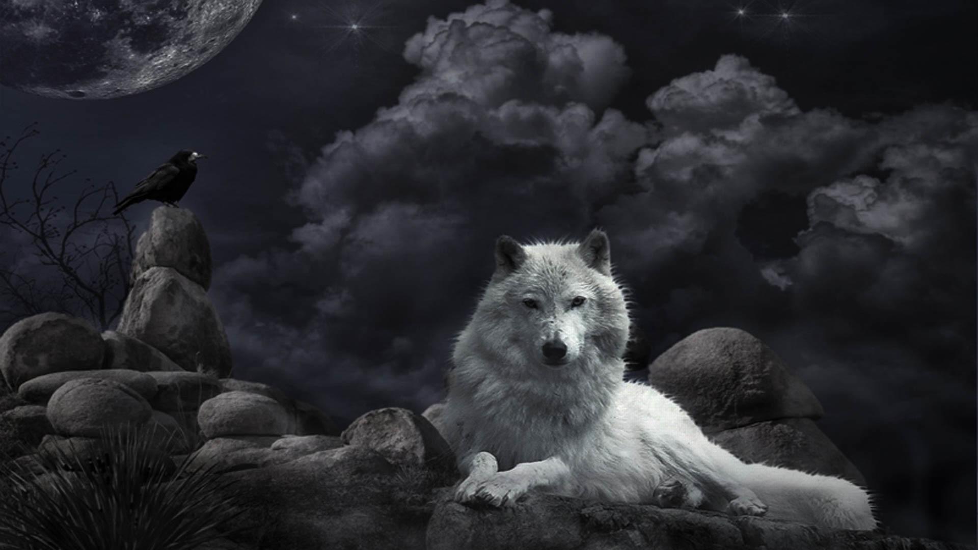 … Wolf (5) …