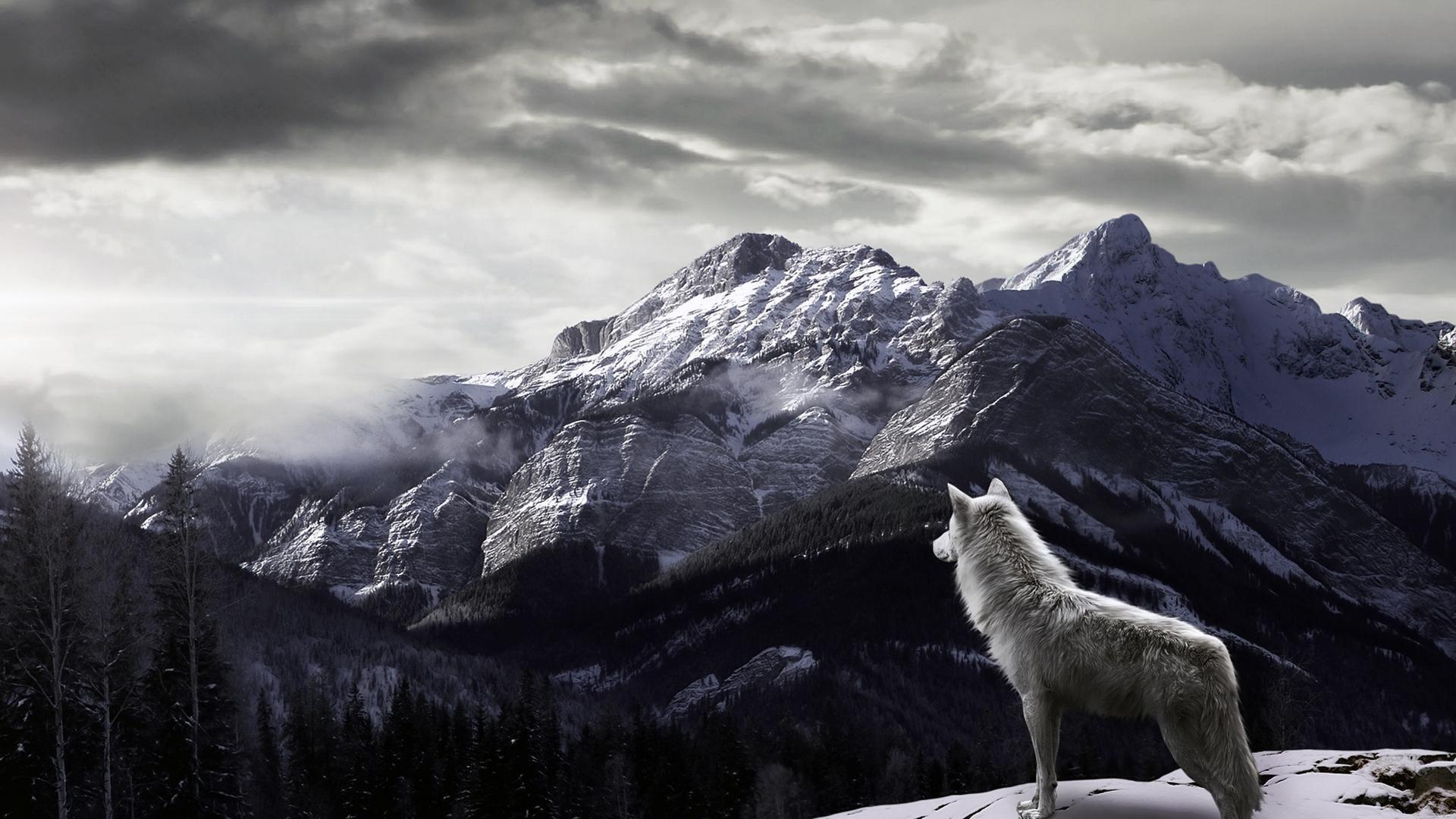 Wolf Wallpaper Best HD Wallpaper