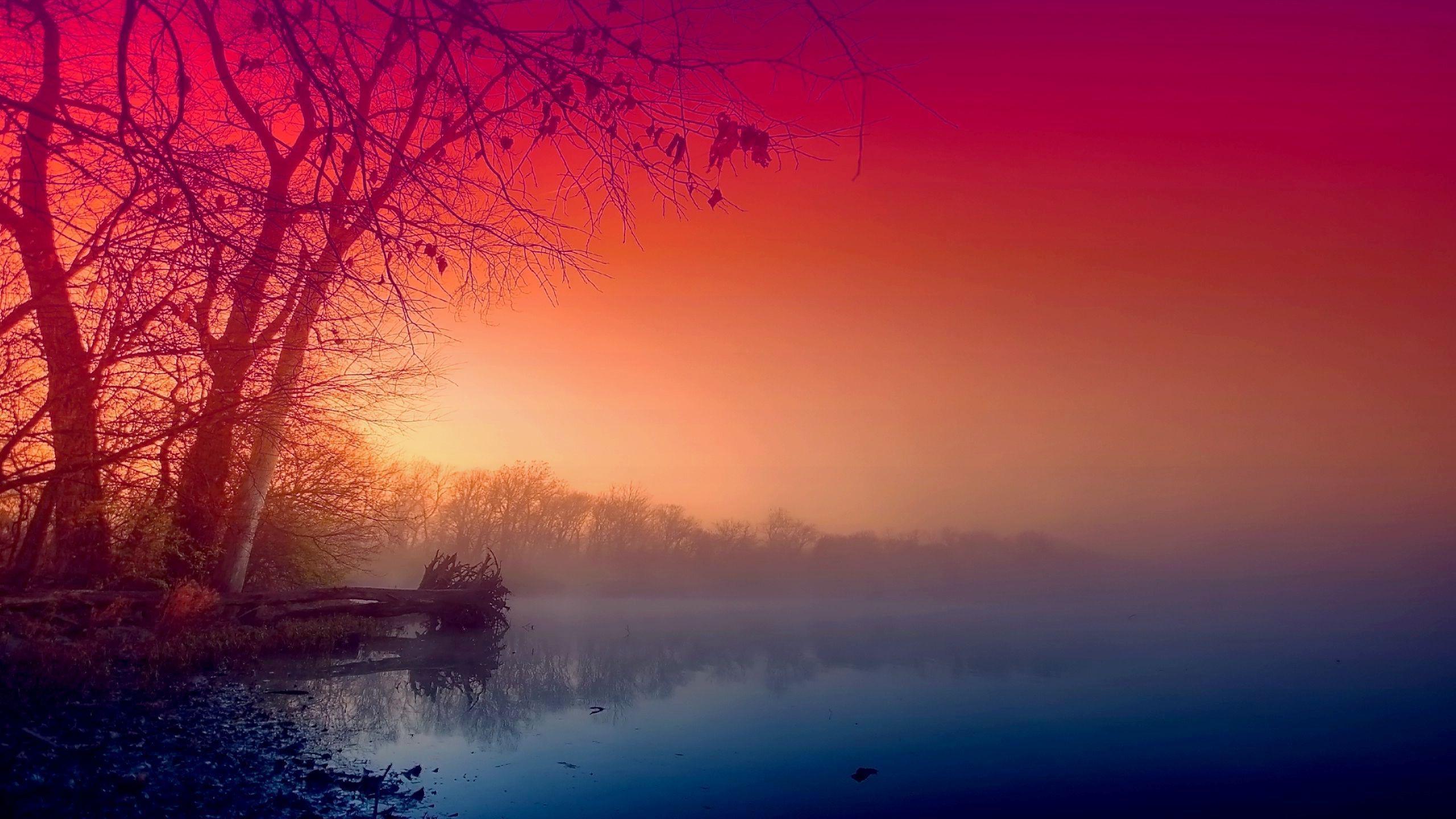 Beautiful fog wallpaper 2560×1440.