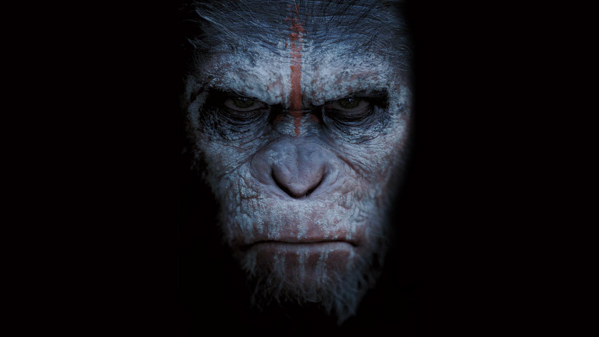 Bathing apes #6994760