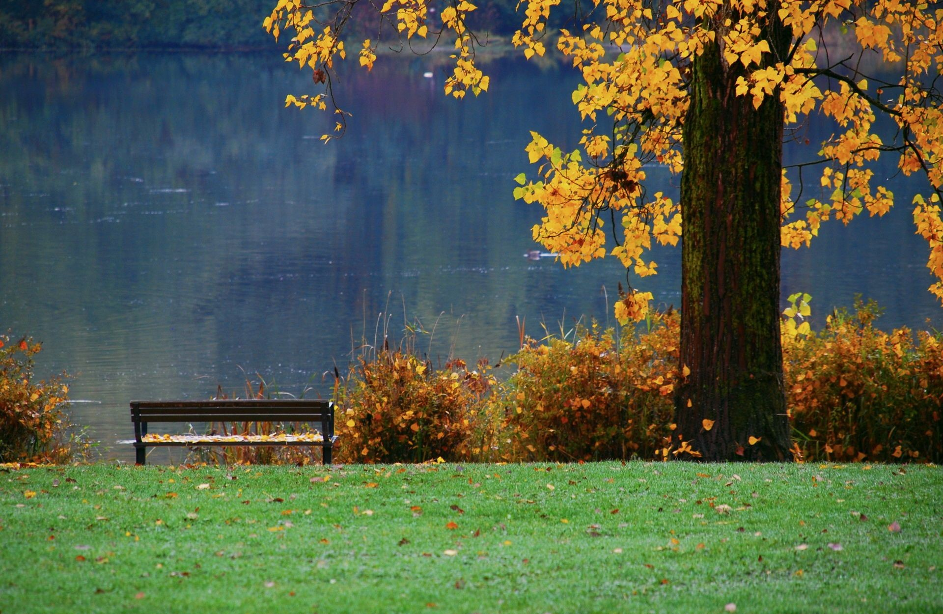 Autumn Leaves HD Wallpapers, Autumn Leaves Background, New Wallpapers