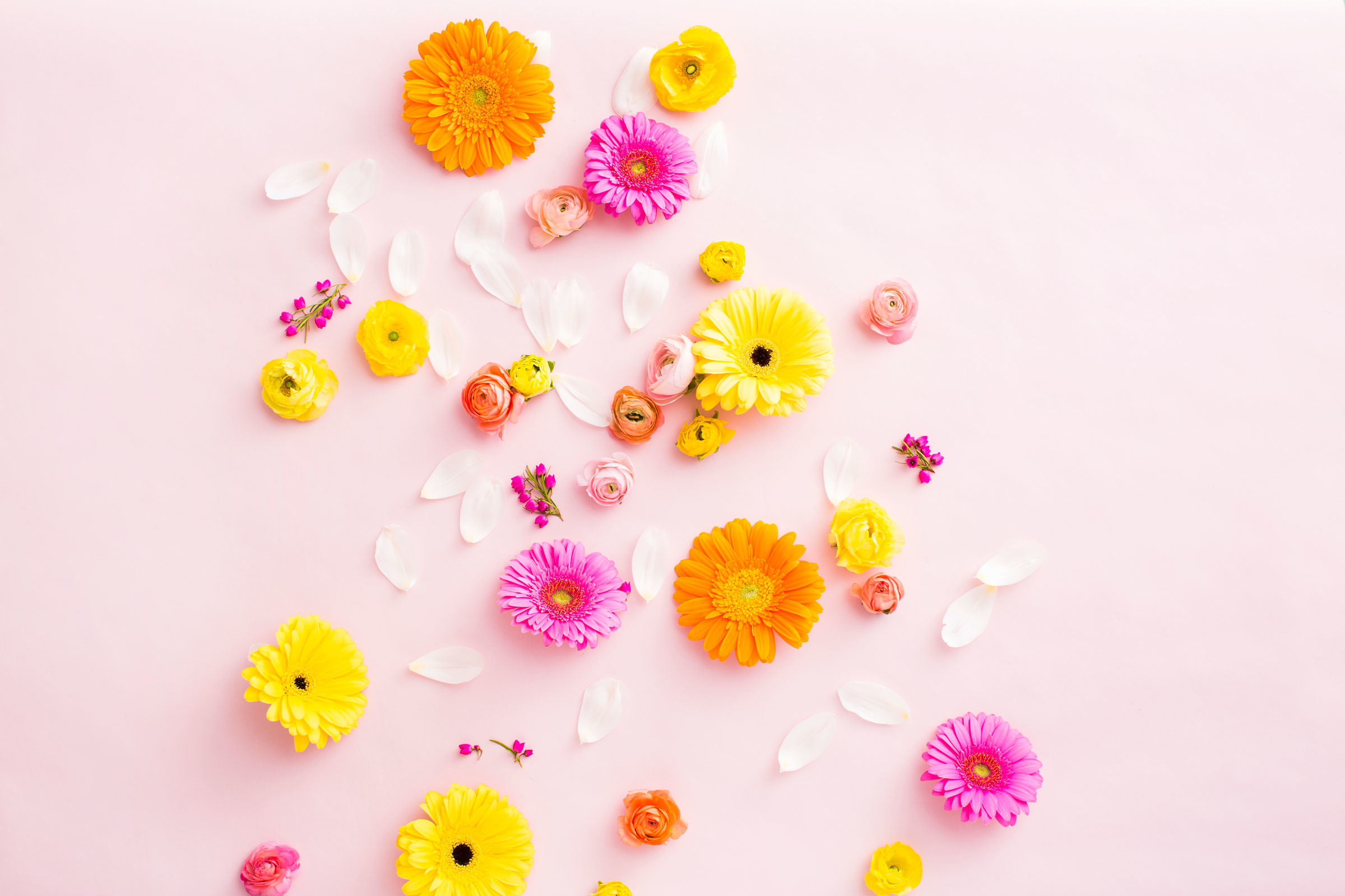 Download an Array of Flowers