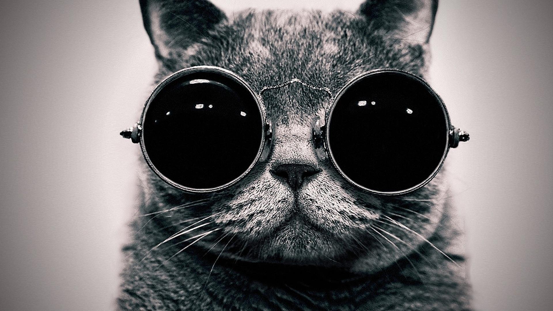 Steampunk Cat Wallpaper » WallDevil – Best free HD desktop and .