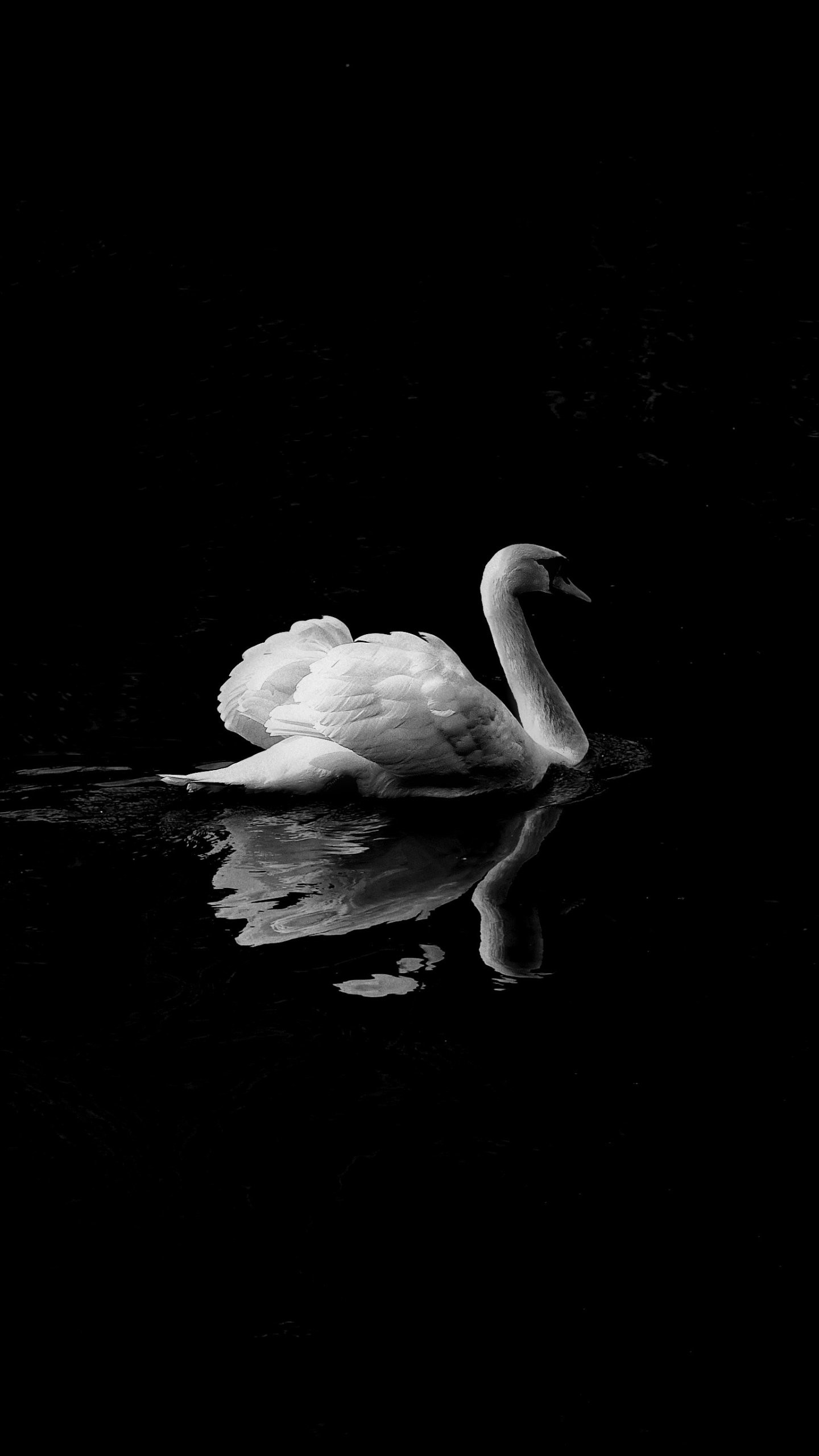 Swan in Lake iPhone Mobile Wallpaper