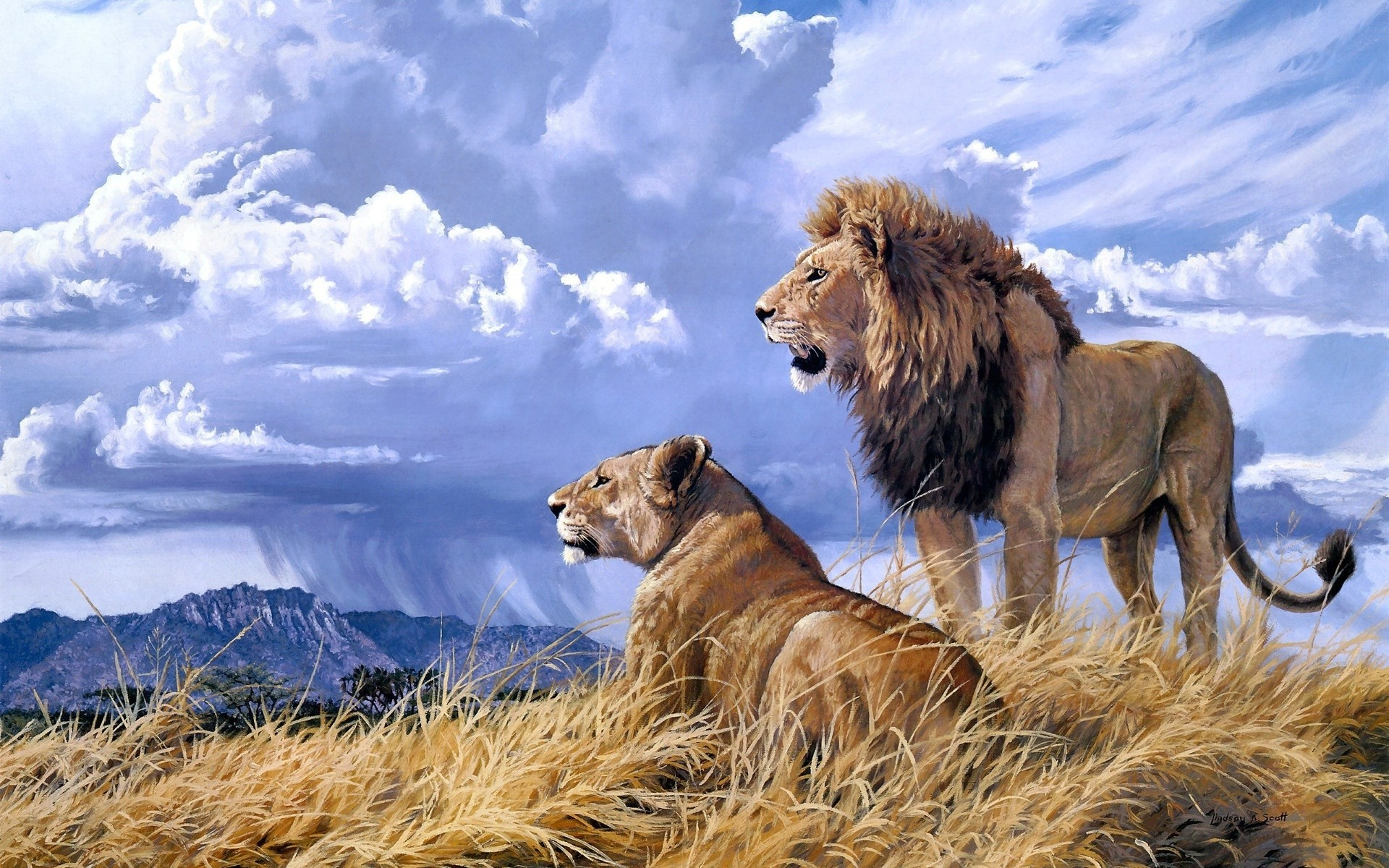 africa grass predator couple love sky clouds rain weather wallpaper .