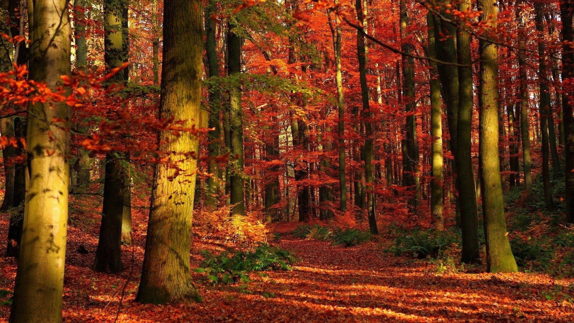 hd autumn wallpaper 1920×1080