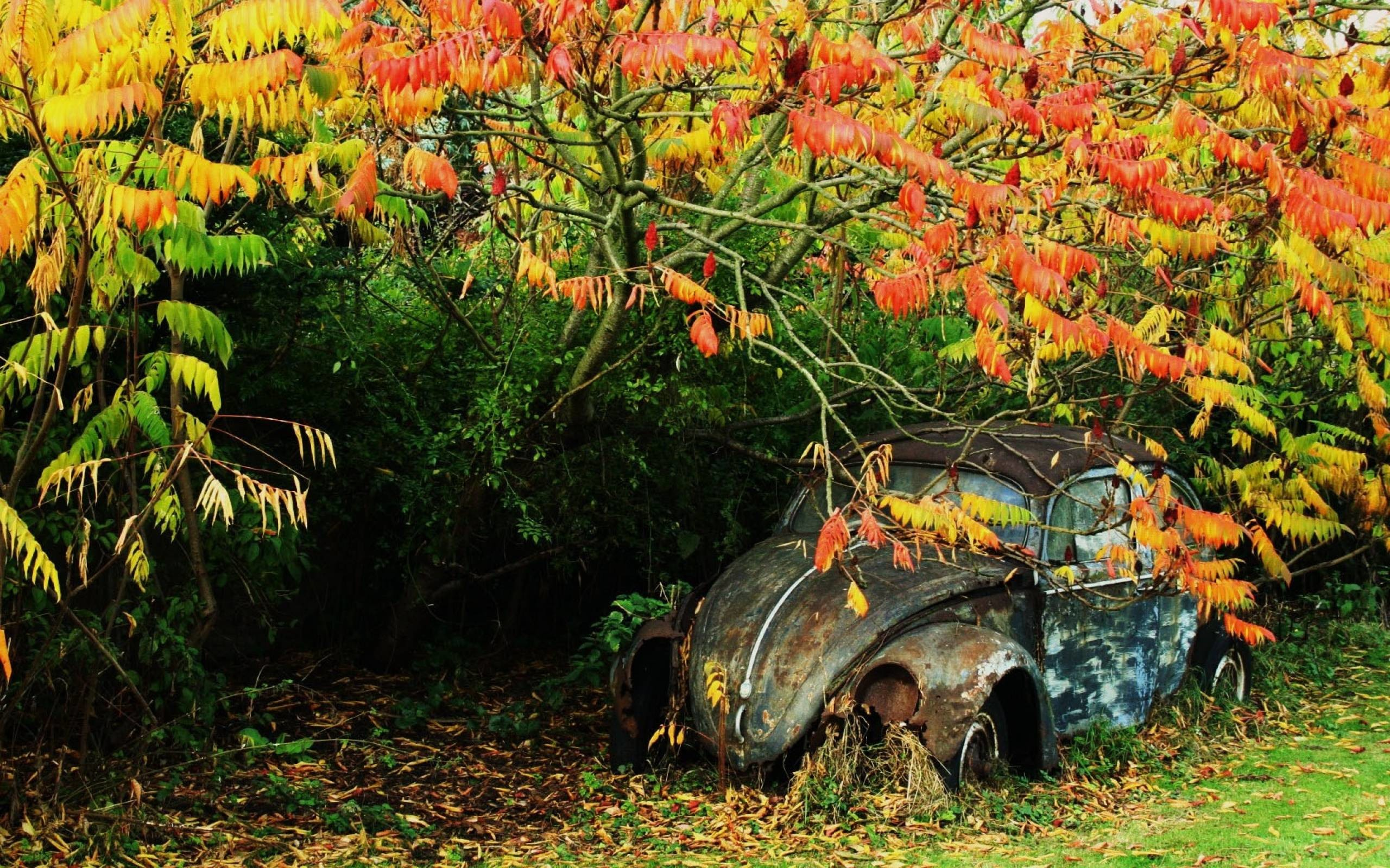 Rusty VW beetle