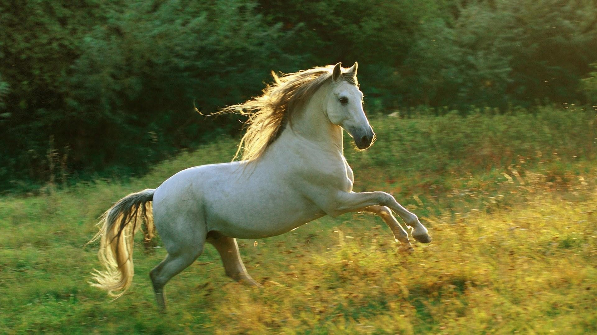 horse wallpapers category of free hd wallpapers horse screensavers is .