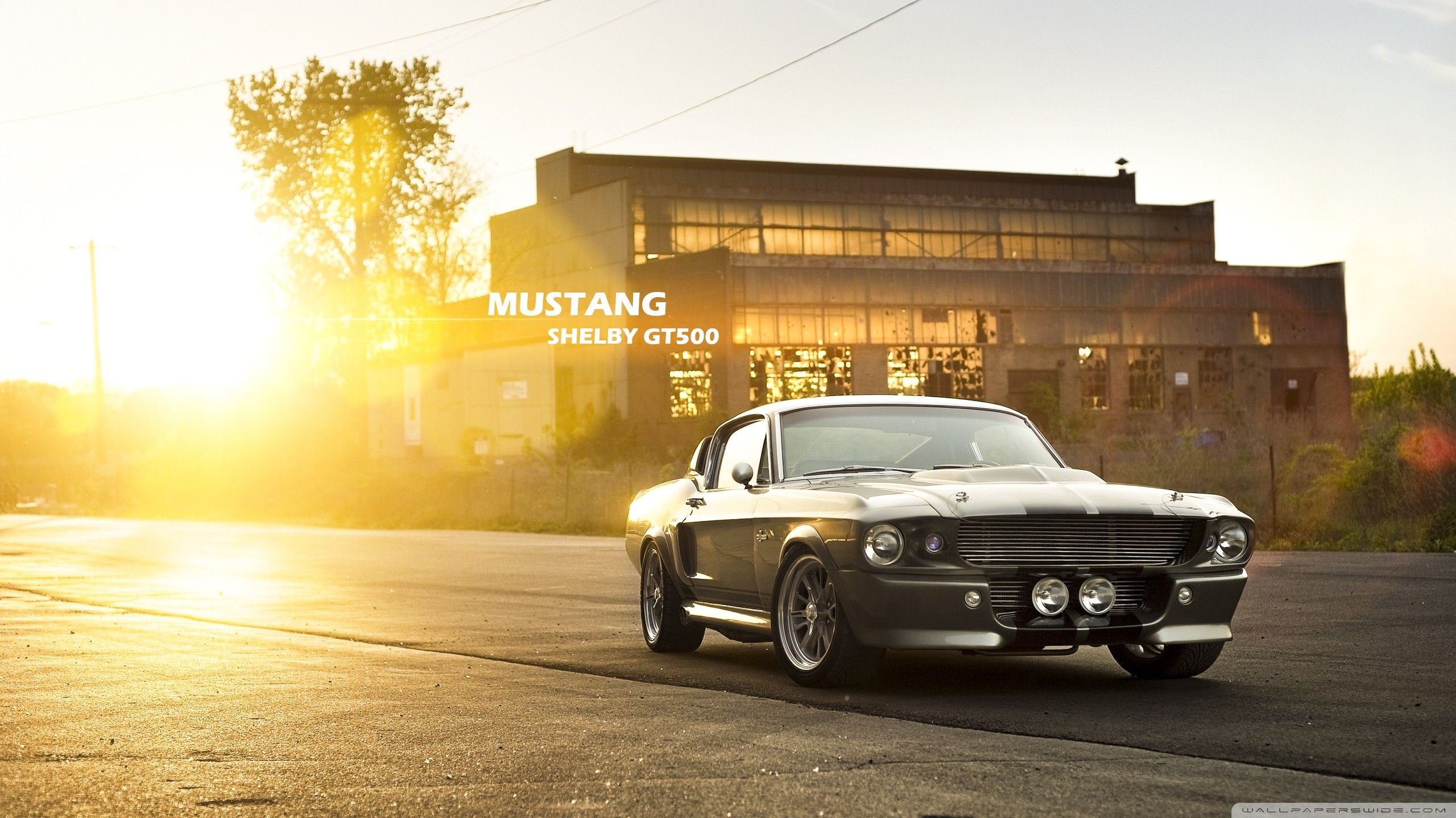 Mustang Shelby GT500 HD Wide Wallpaper for Widescreen