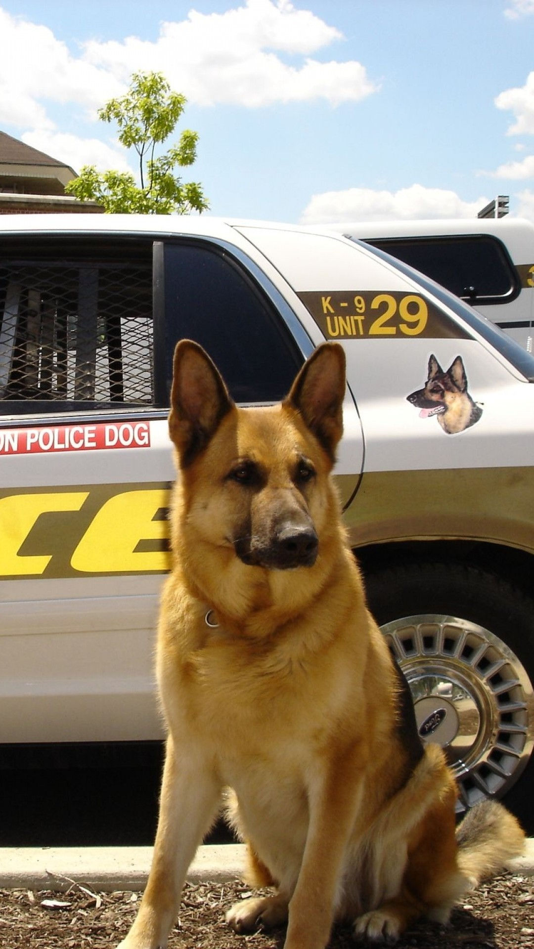 Preview wallpaper dog, sheepdog, police, car 1080×1920