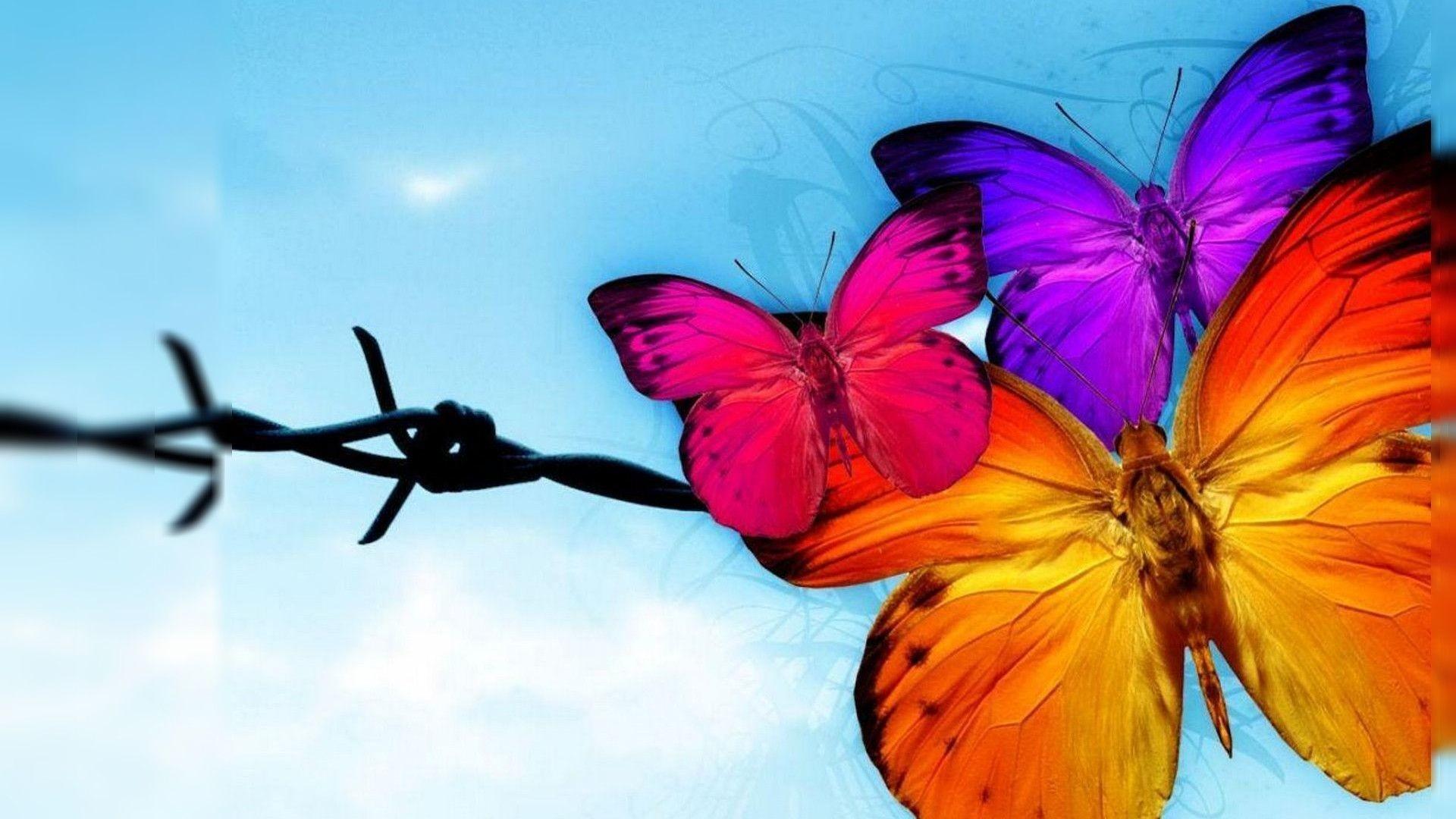 Butterfly HD Wallpaper Free Download