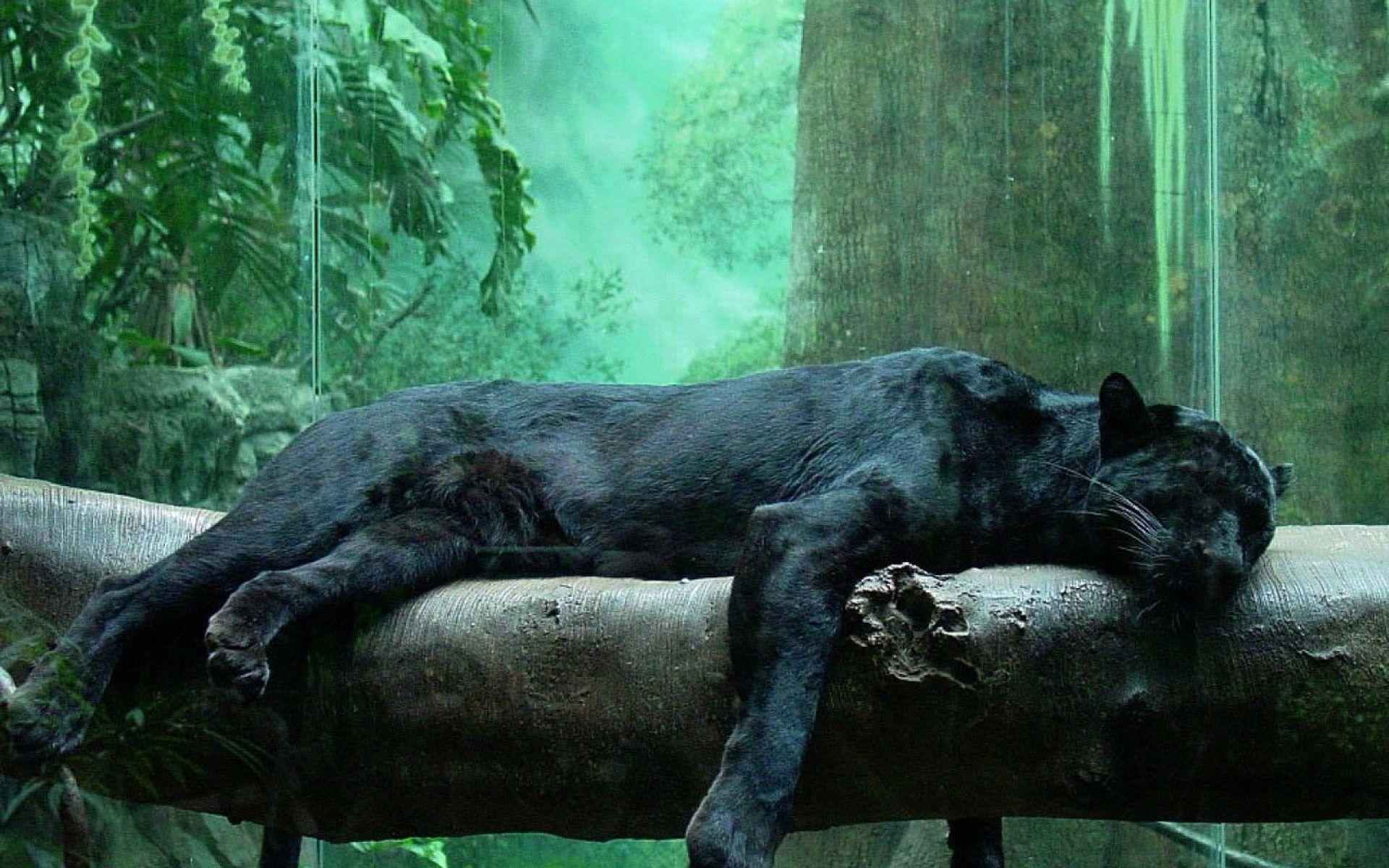 Black Panther Wallpapers – HD Wallpapers Inn