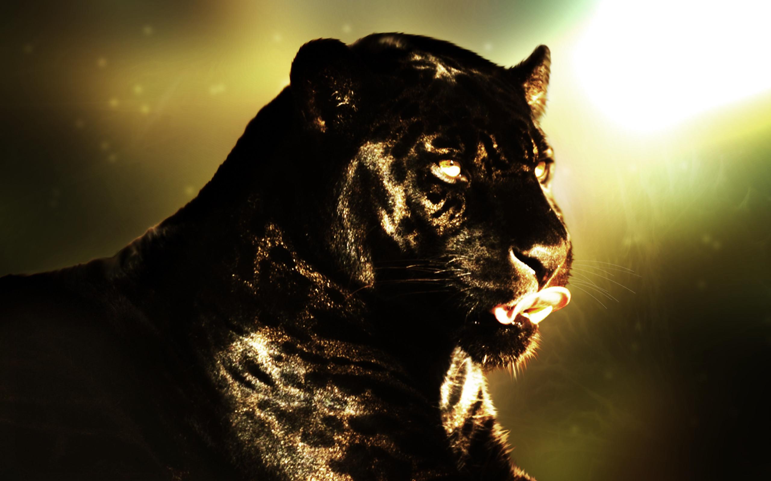 Animal – Black Panther Wallpaper
