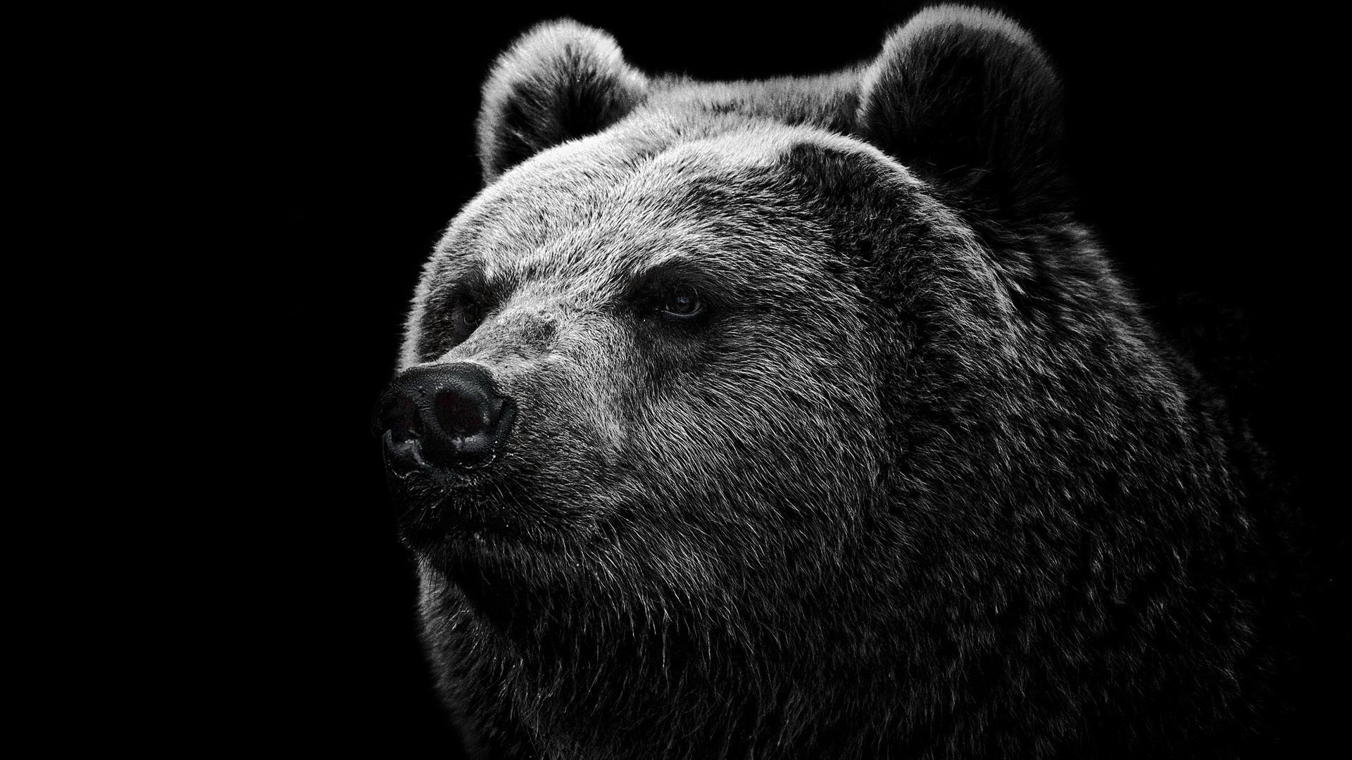Cute Bear Face Black Black White Download Hd Wallpaper Image Wallpaper