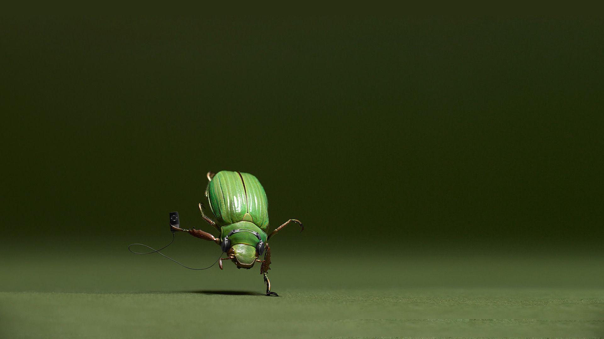 Bug HD Wallpapers
