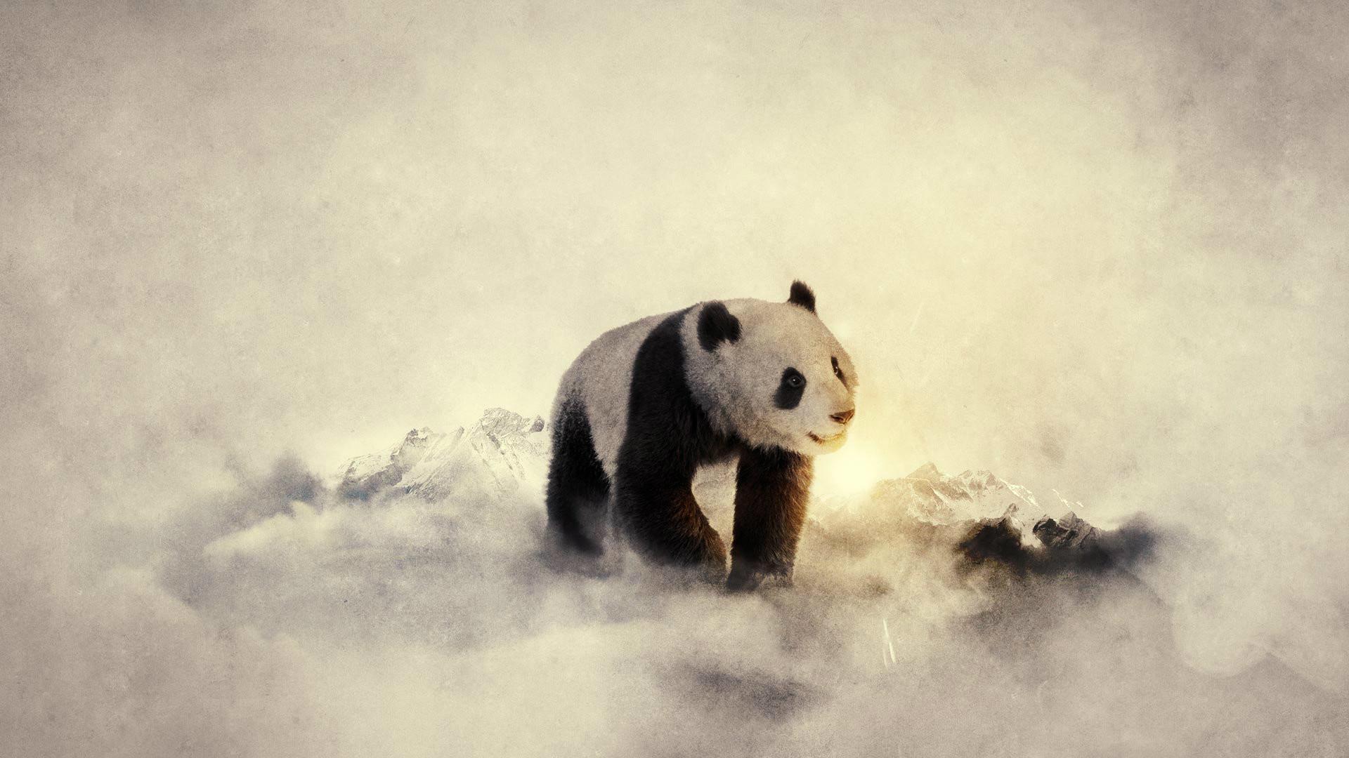 Beautiful Panda 3D Wallpaper