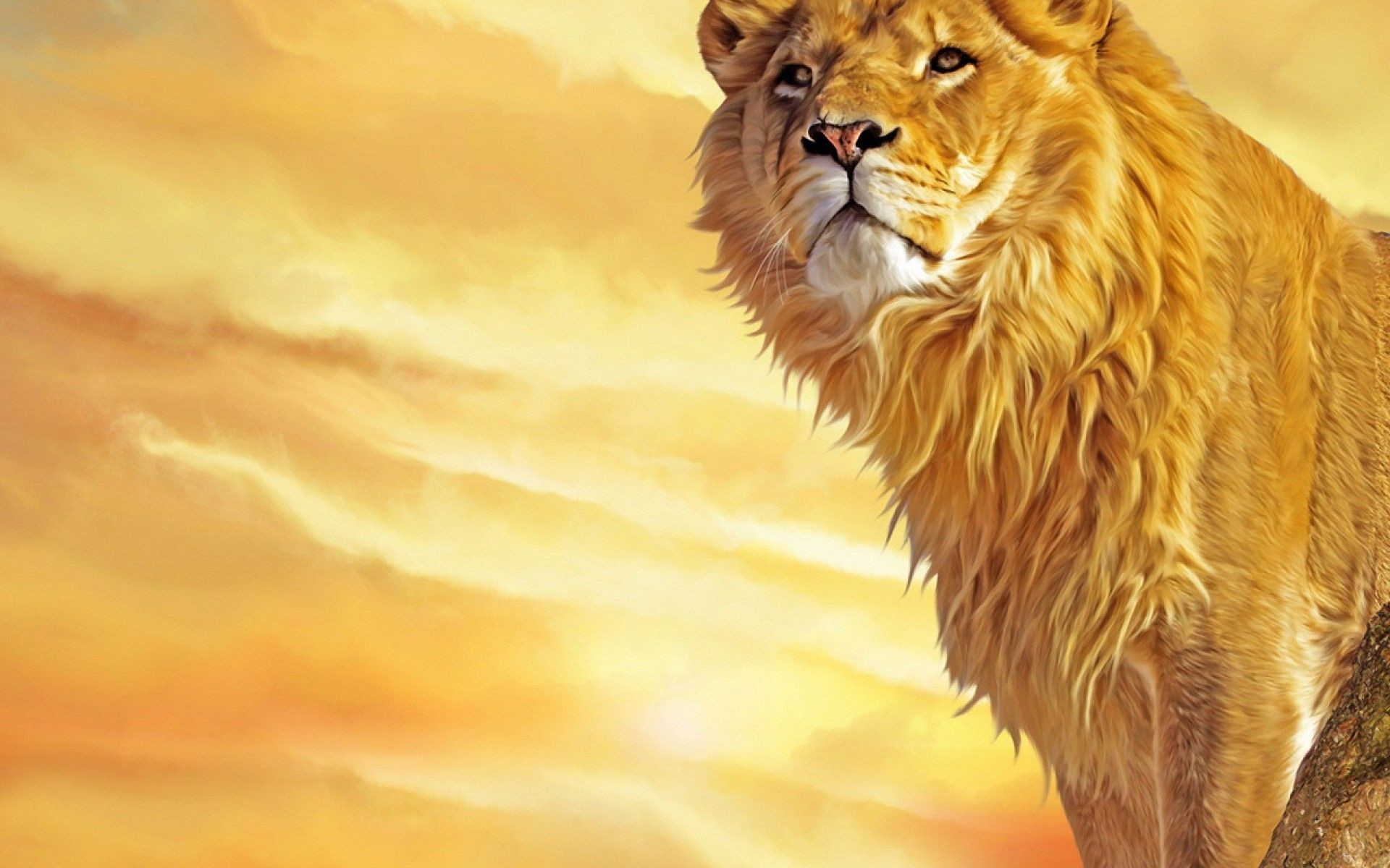 Angry Lion Wallpaper   HD Animals   Pinterest   Nature wallpaper, Lions and  Wallpaper