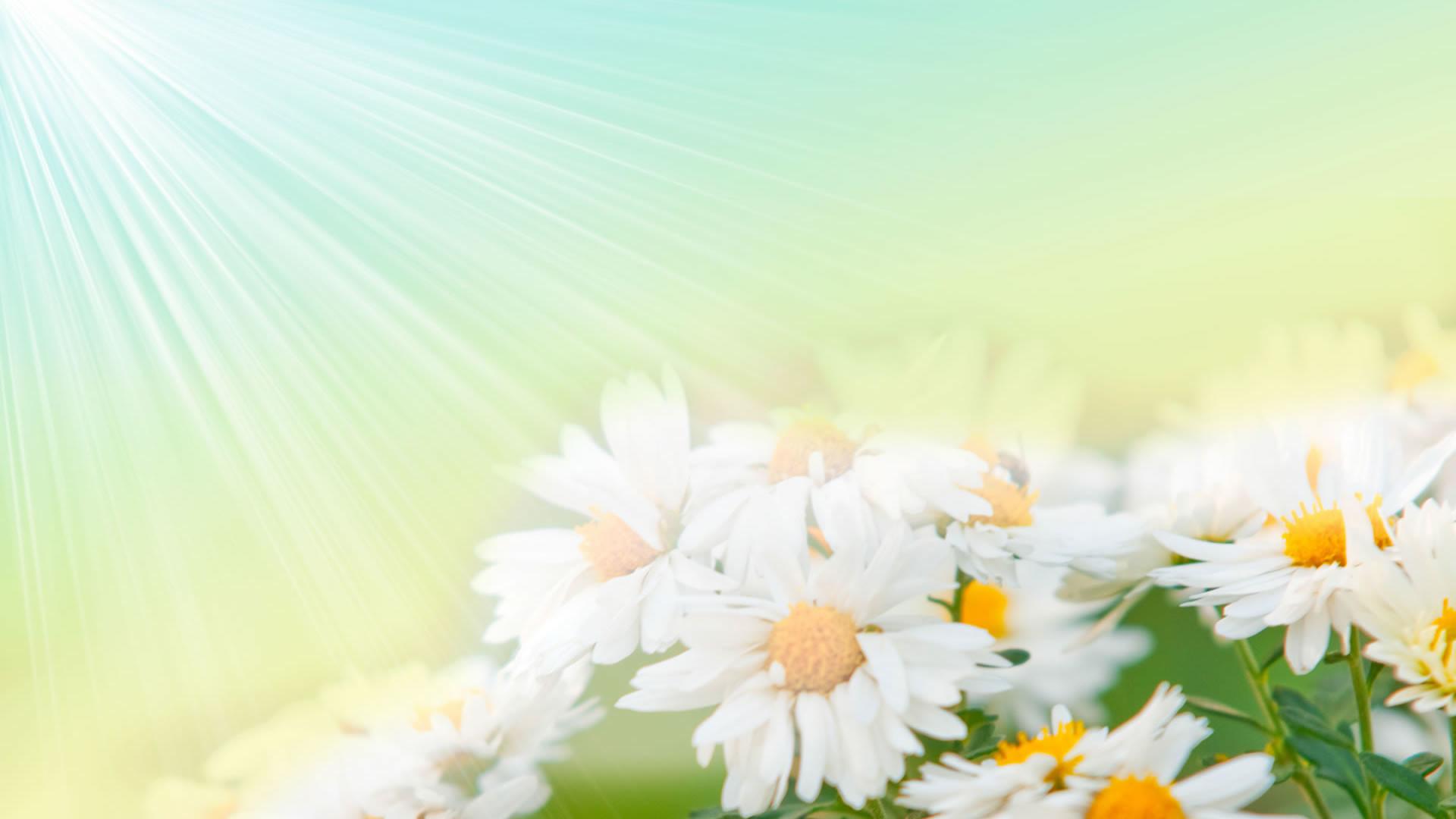 4. cartoon-flowers-wallpaper4-1-600×338