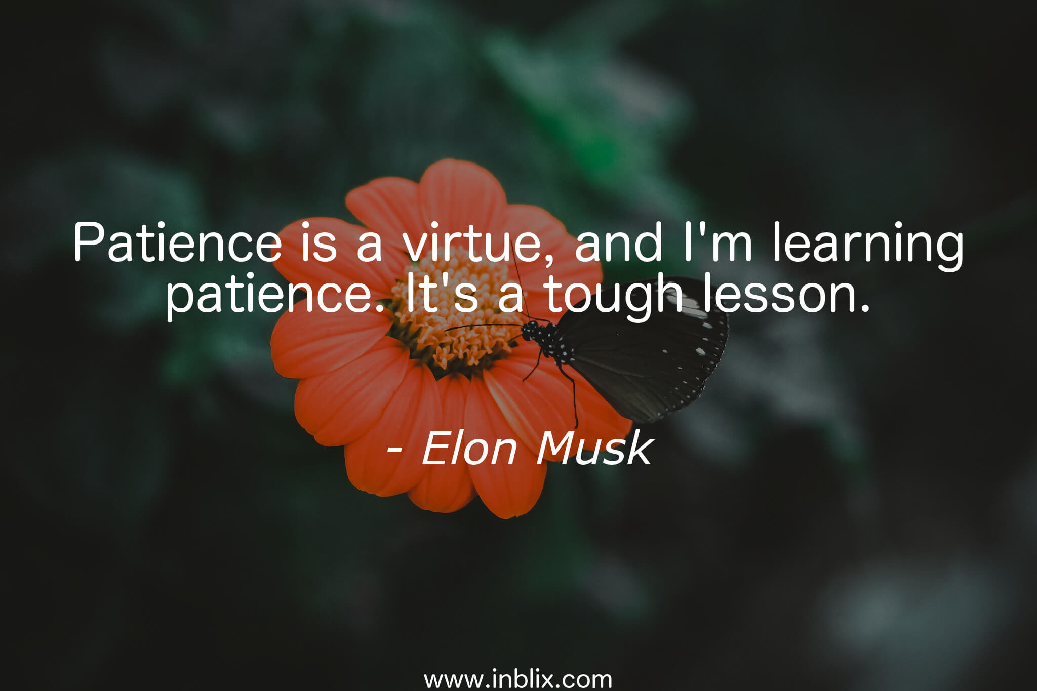 Patience is a virtue, and I'm learning patience. It's a tough lesson