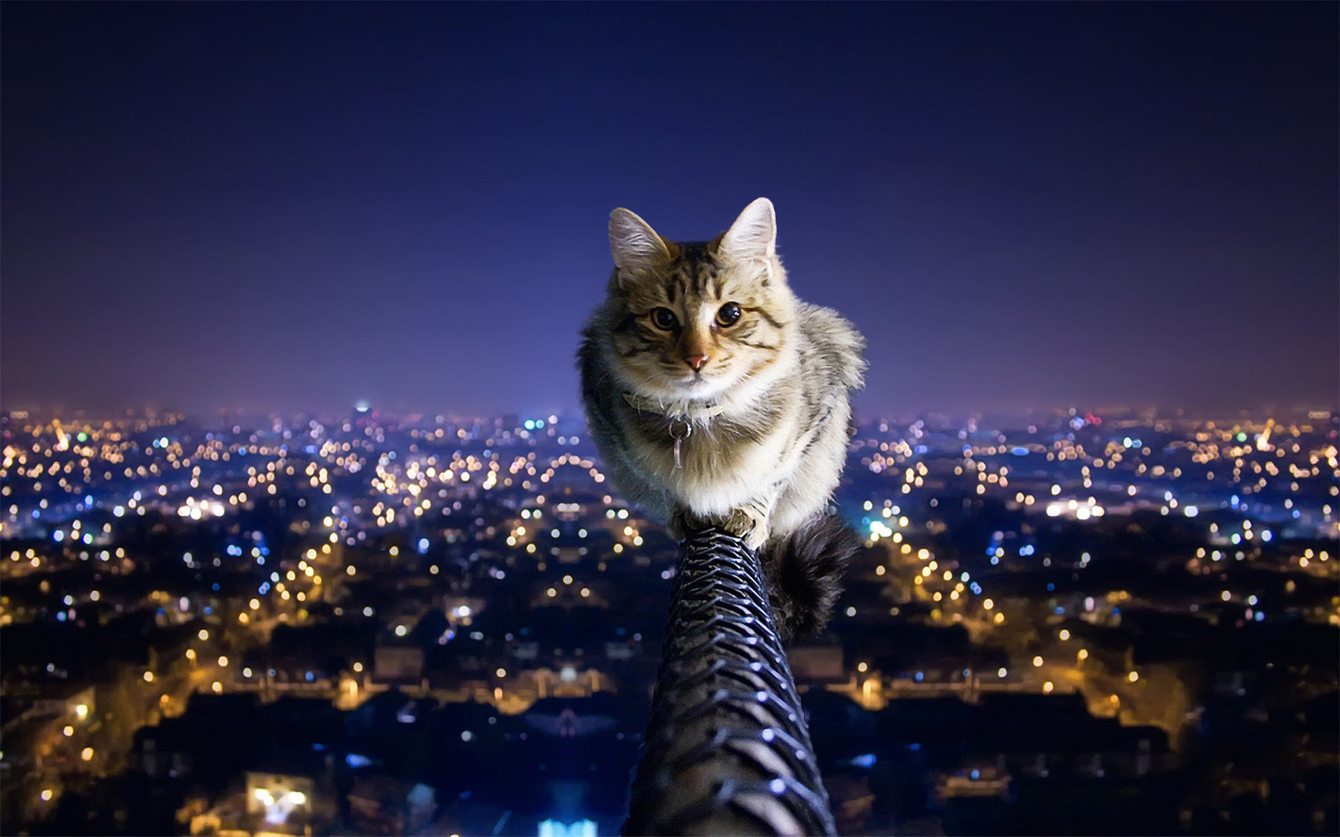 Cat Over The City Night Wallpaper