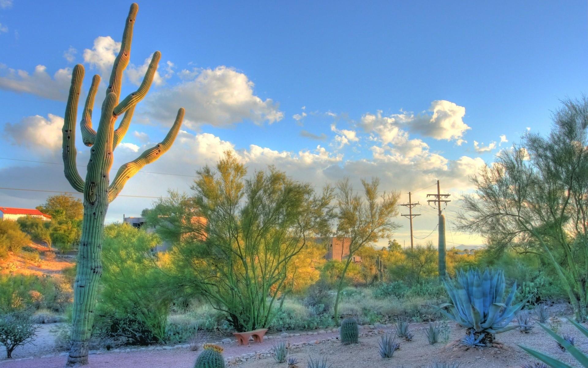 … Desert Arizona Wallpaper Desert, Arizona, Cactus, Tucson .