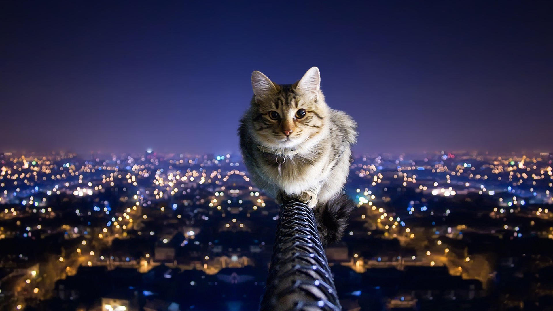 … cityscapes cats city lights balance nighttime pole wallpapers …