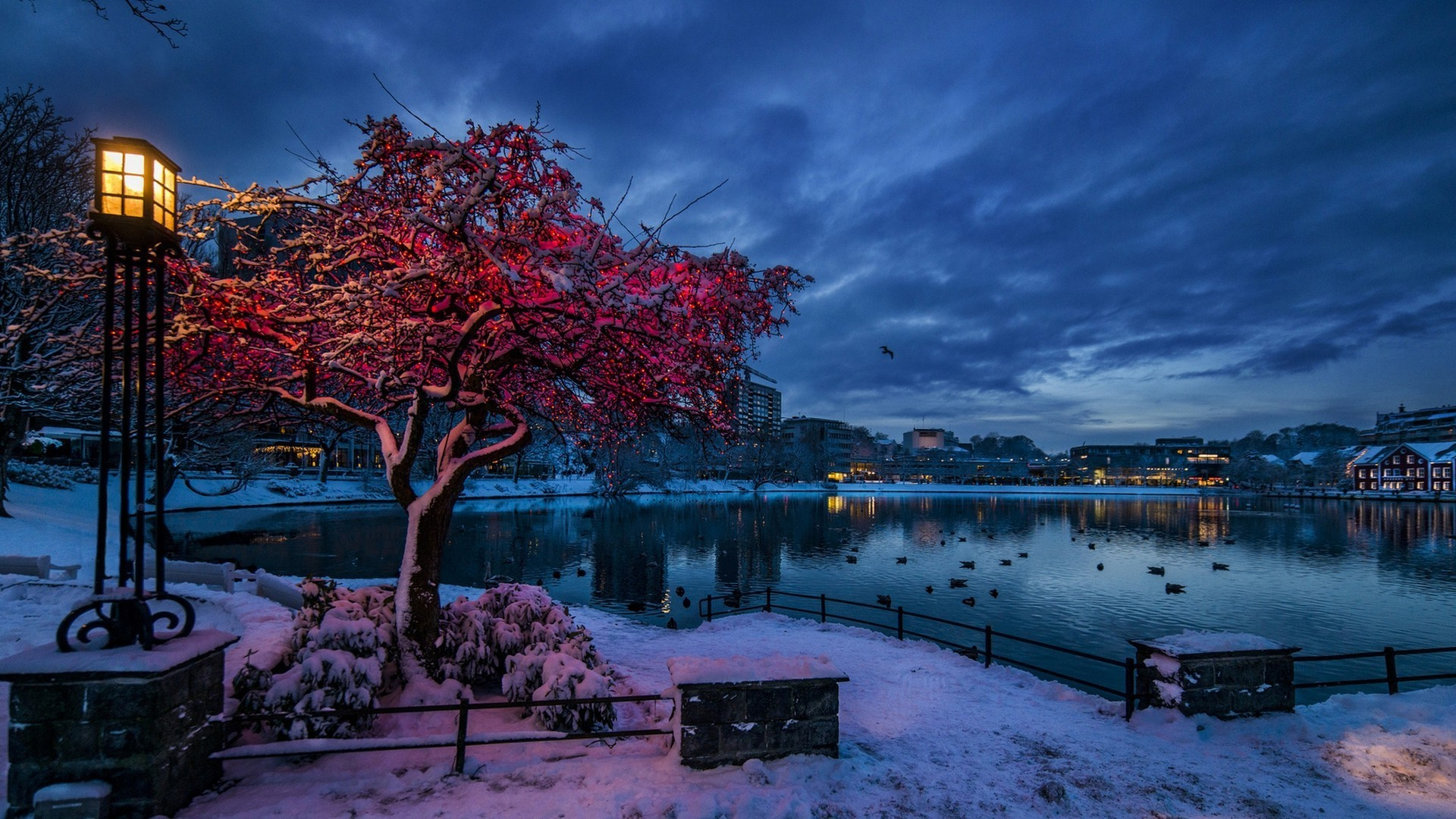 nature, Trees, City, Cityscape, Norway, Evening, Winter, Snow, Lights,  Water, Lake, Clouds, Branch, House, Reflection, Birds, Building, Lamp  Wallpapers HD …