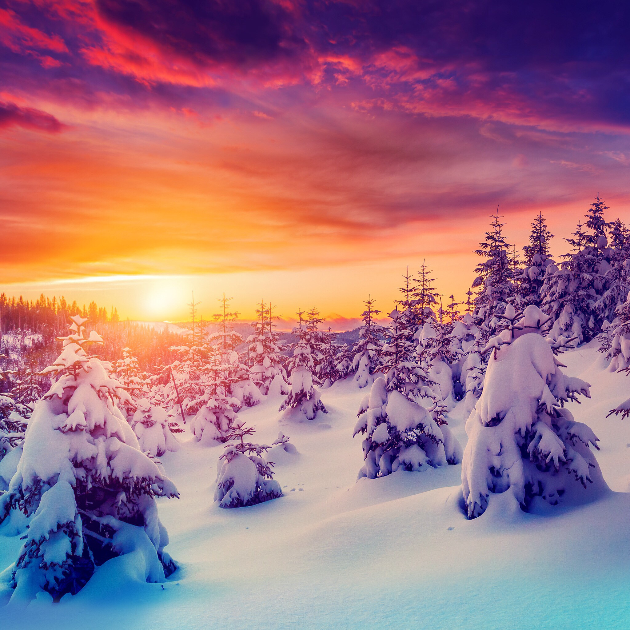 iPad mini Retina, Sunset, Sundown, Sun, Snow, Forest, Frost –