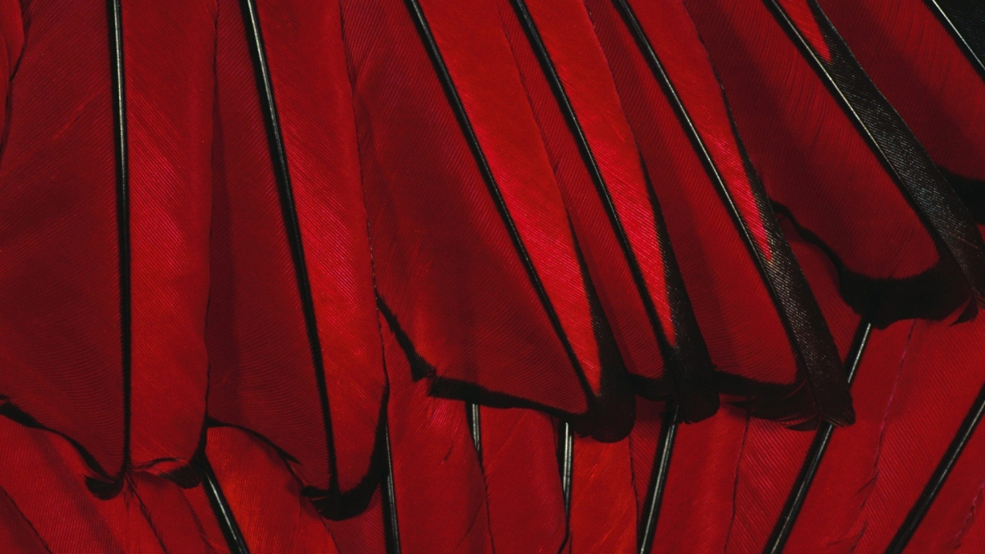 black, red, flower