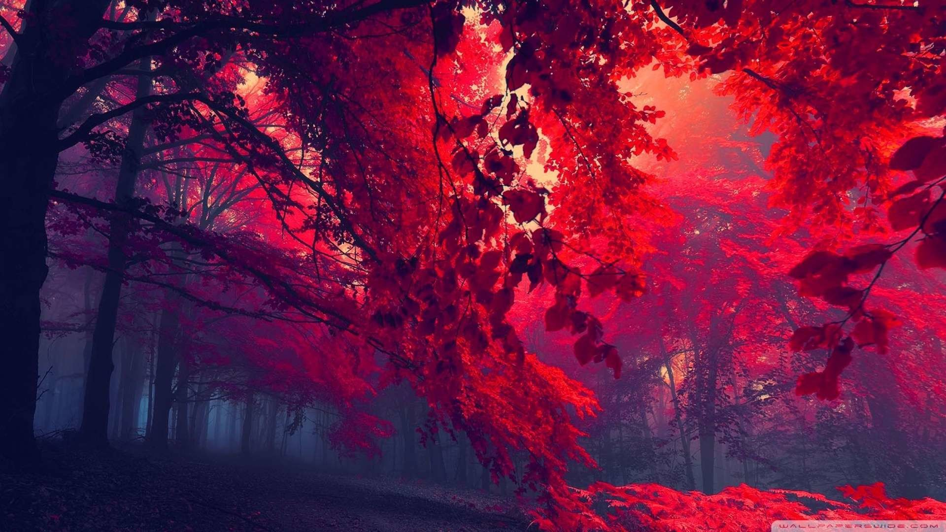 Wallpaper: Red Forest 4 Wallpaper 1080p HD. Upload at February 25 .